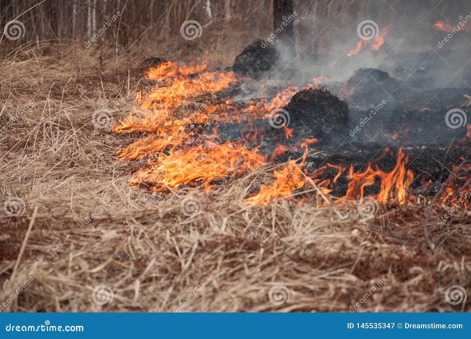Fogo na grama seca E