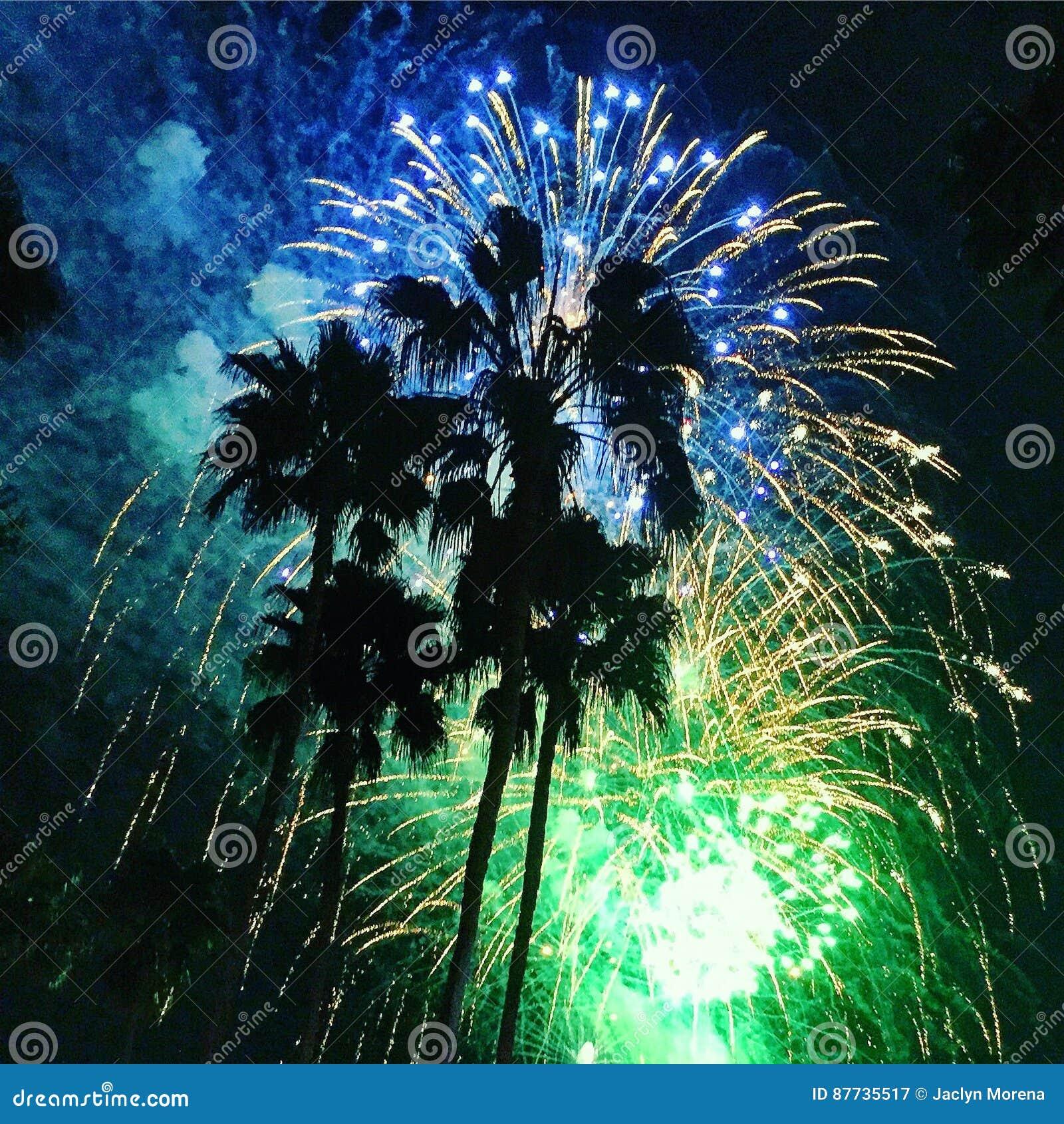 Fogos-de-artifício da palmeira