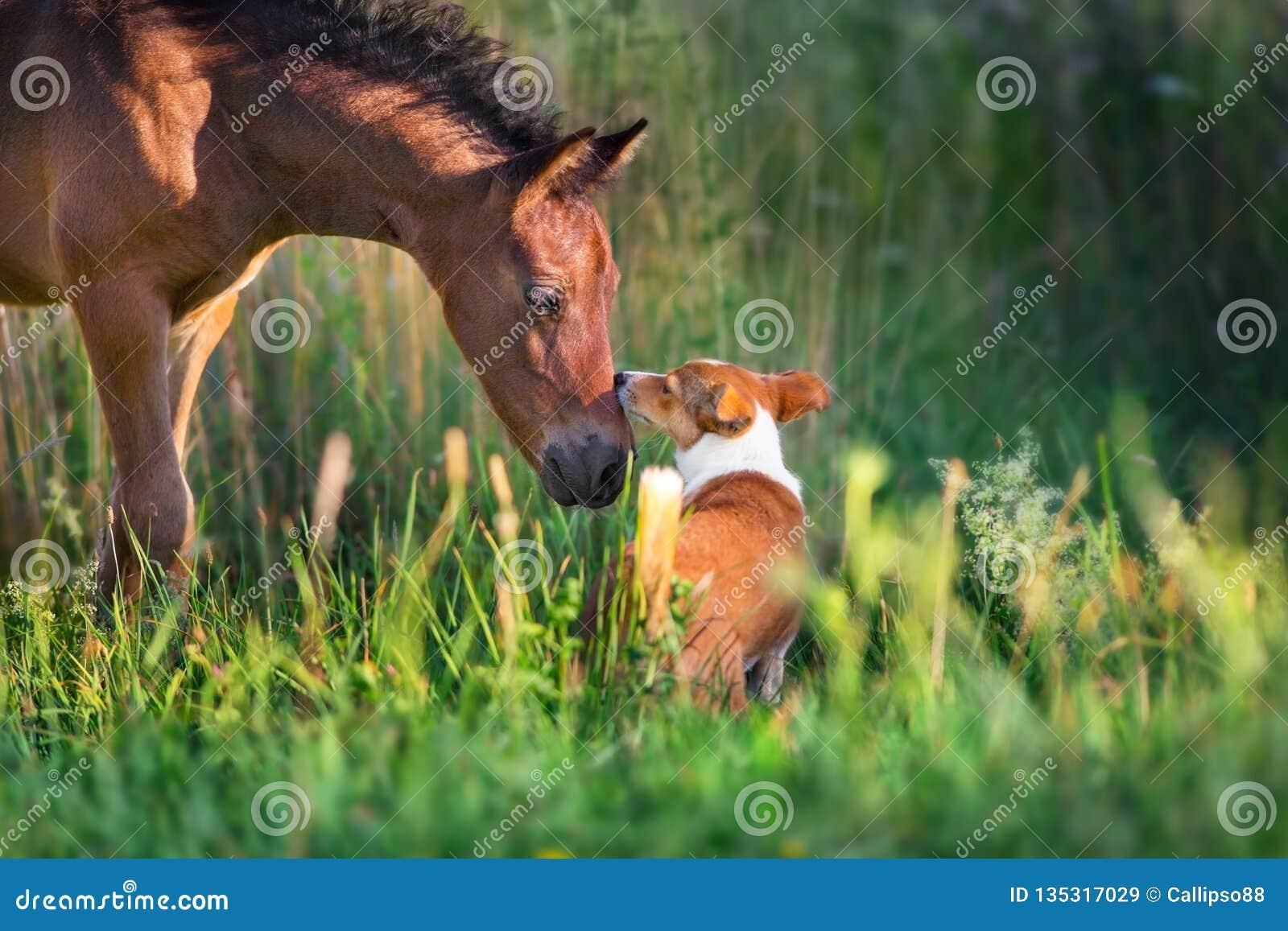 Fohlen mit Hund