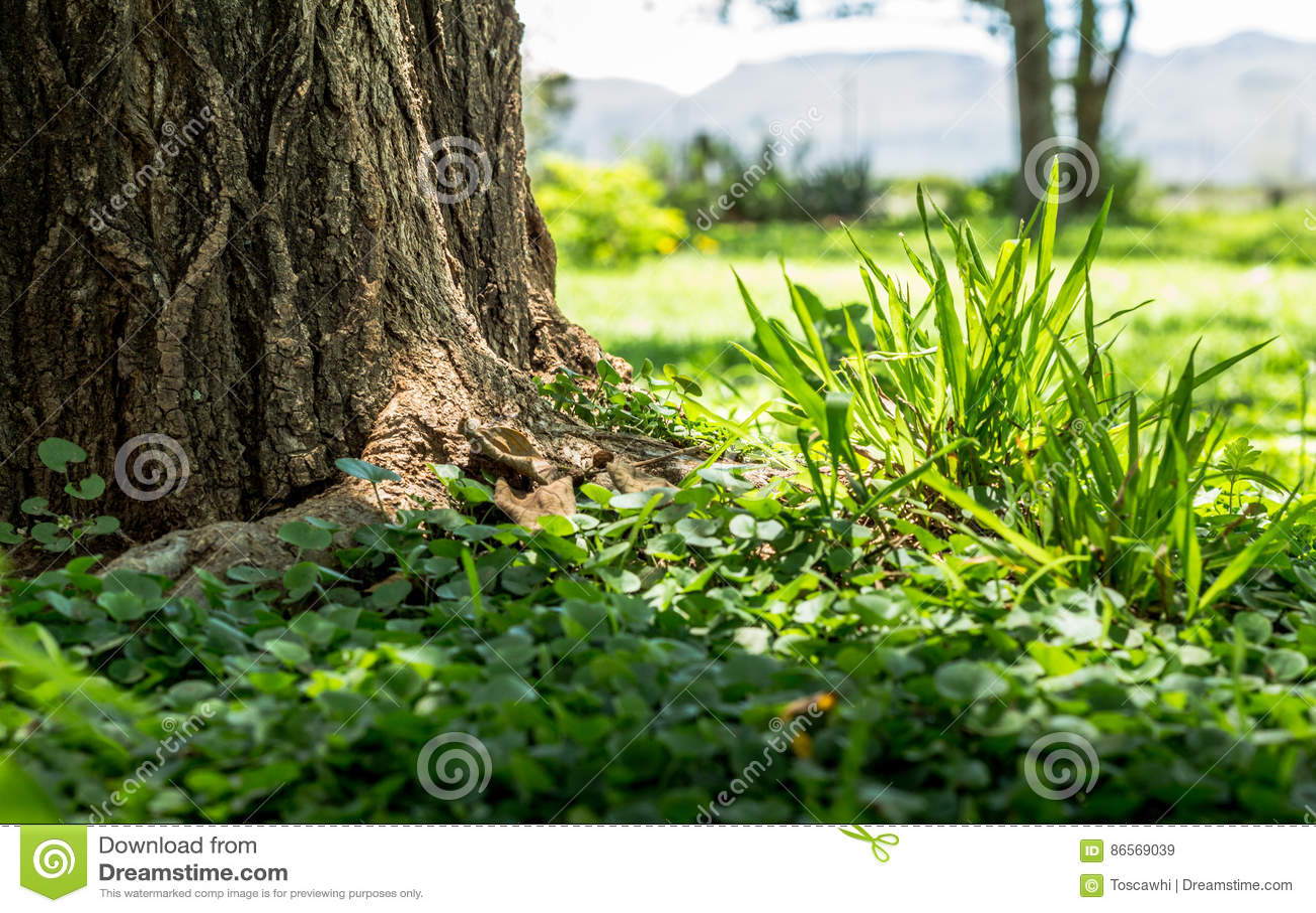 Fokus på rugge för grönt gräs och ogräscloseupen bredvid träd