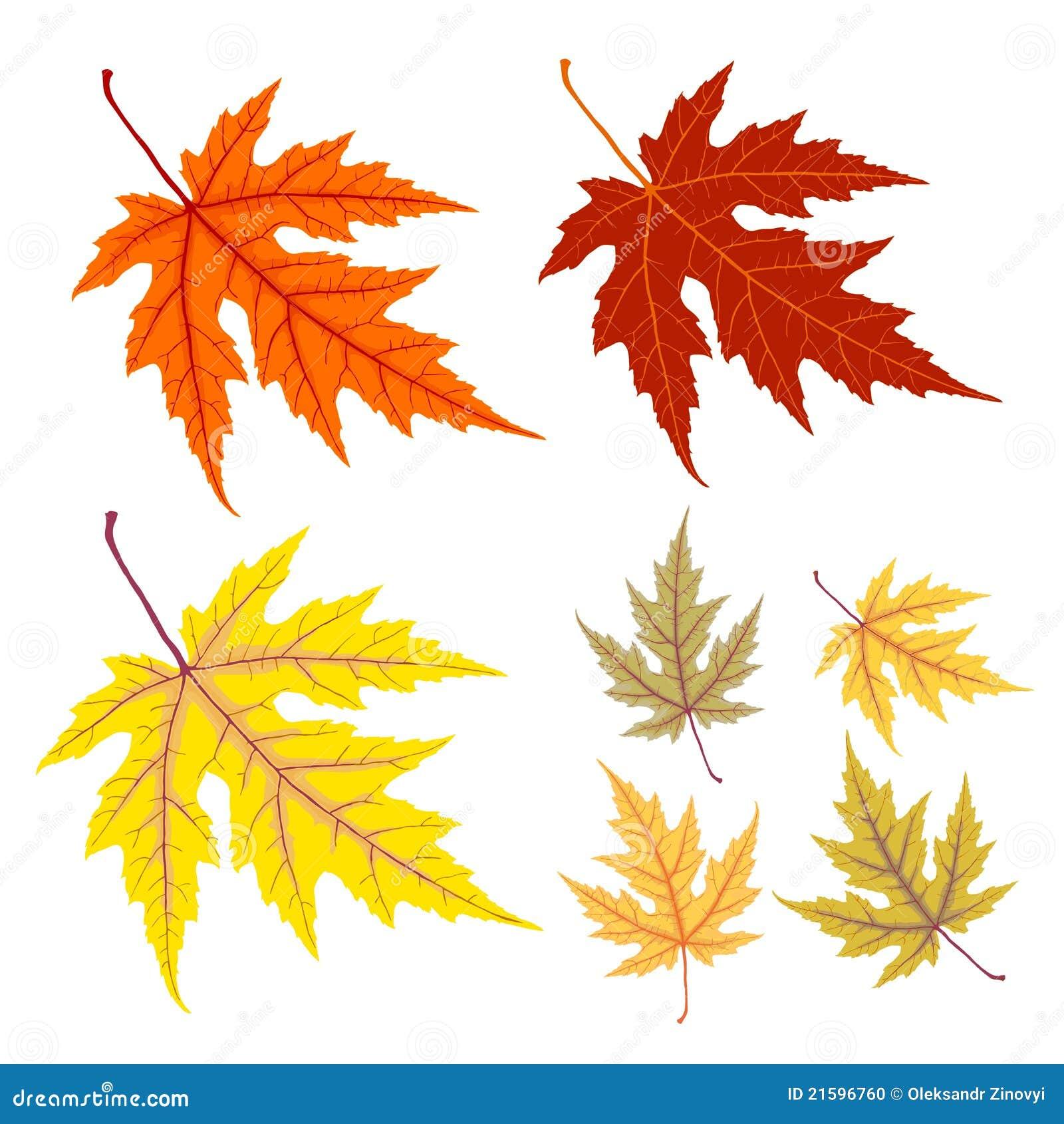 Folha Amarela E Vermelha Do Outono Ilustração Do Vetor