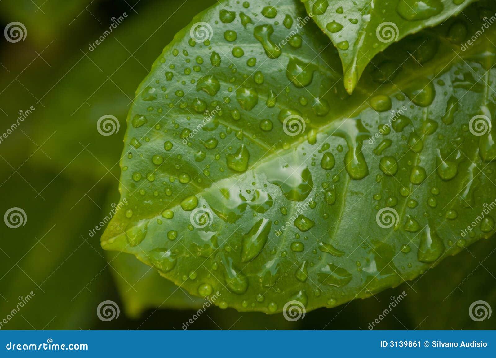 Folha após a chuva