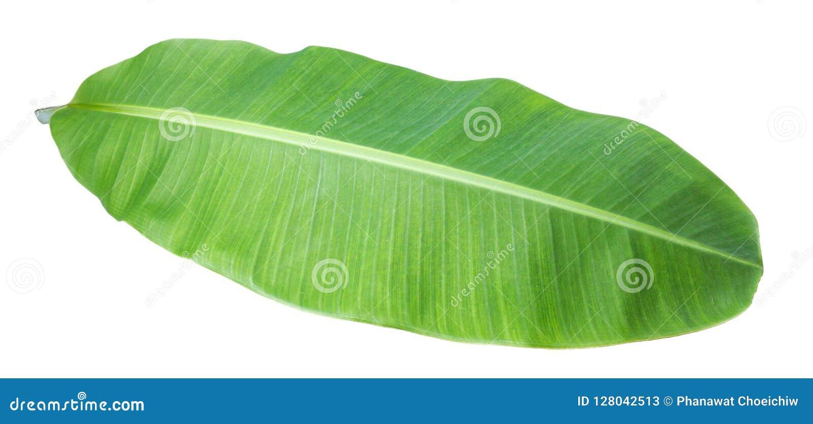 Folha da banana Isolado no fundo branco com trajeto de grampeamento