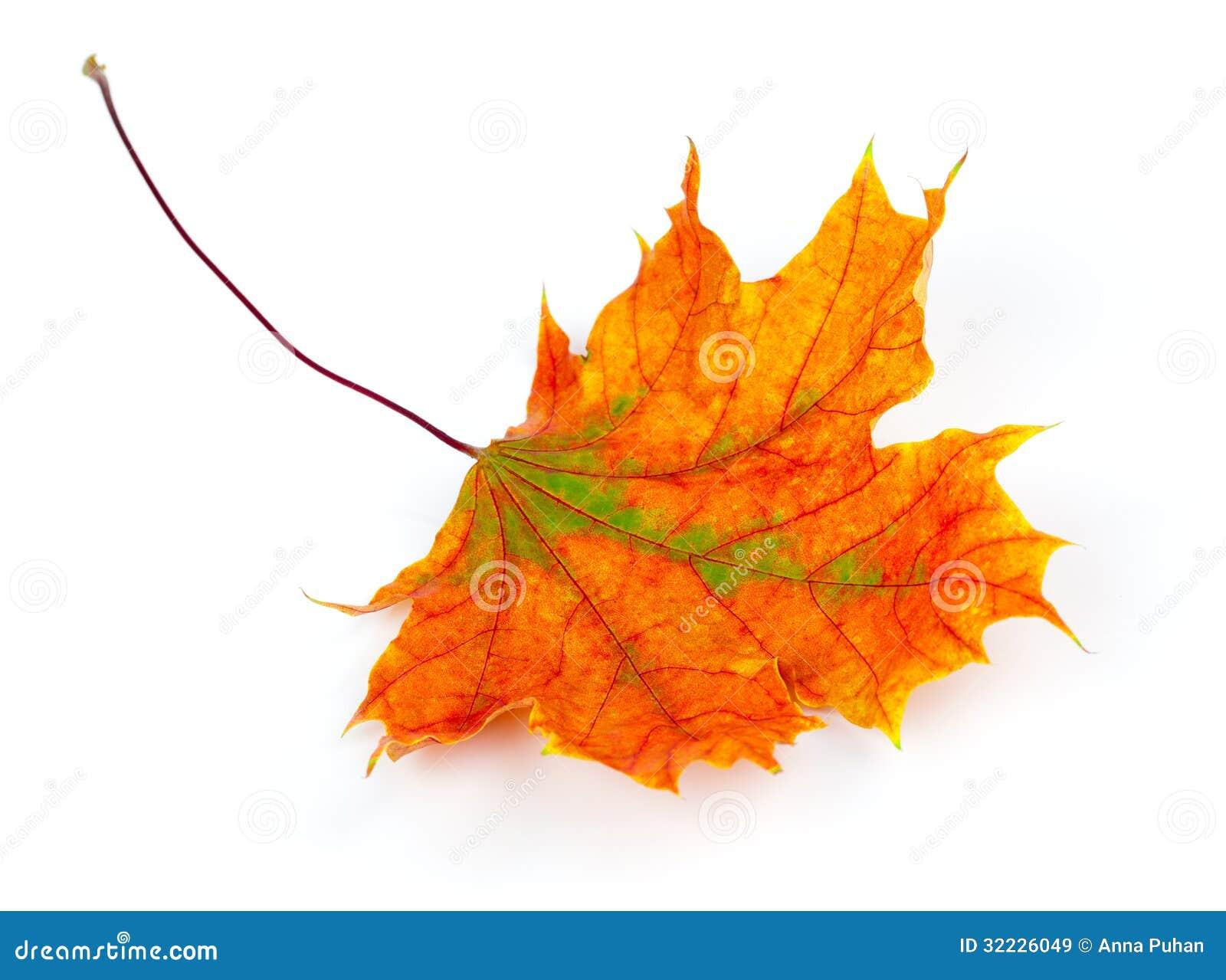 Download Folha de bordo do outono imagem de stock. Imagem de folhas - 32226049
