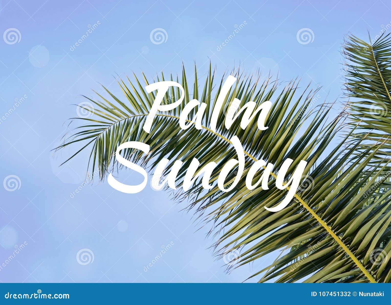 Folha de palmeira contra o céu azul com palma domingo do texto