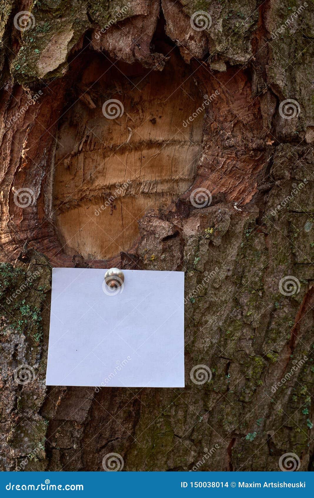 Folha de papel vazia a observação sticked à casca da árvore