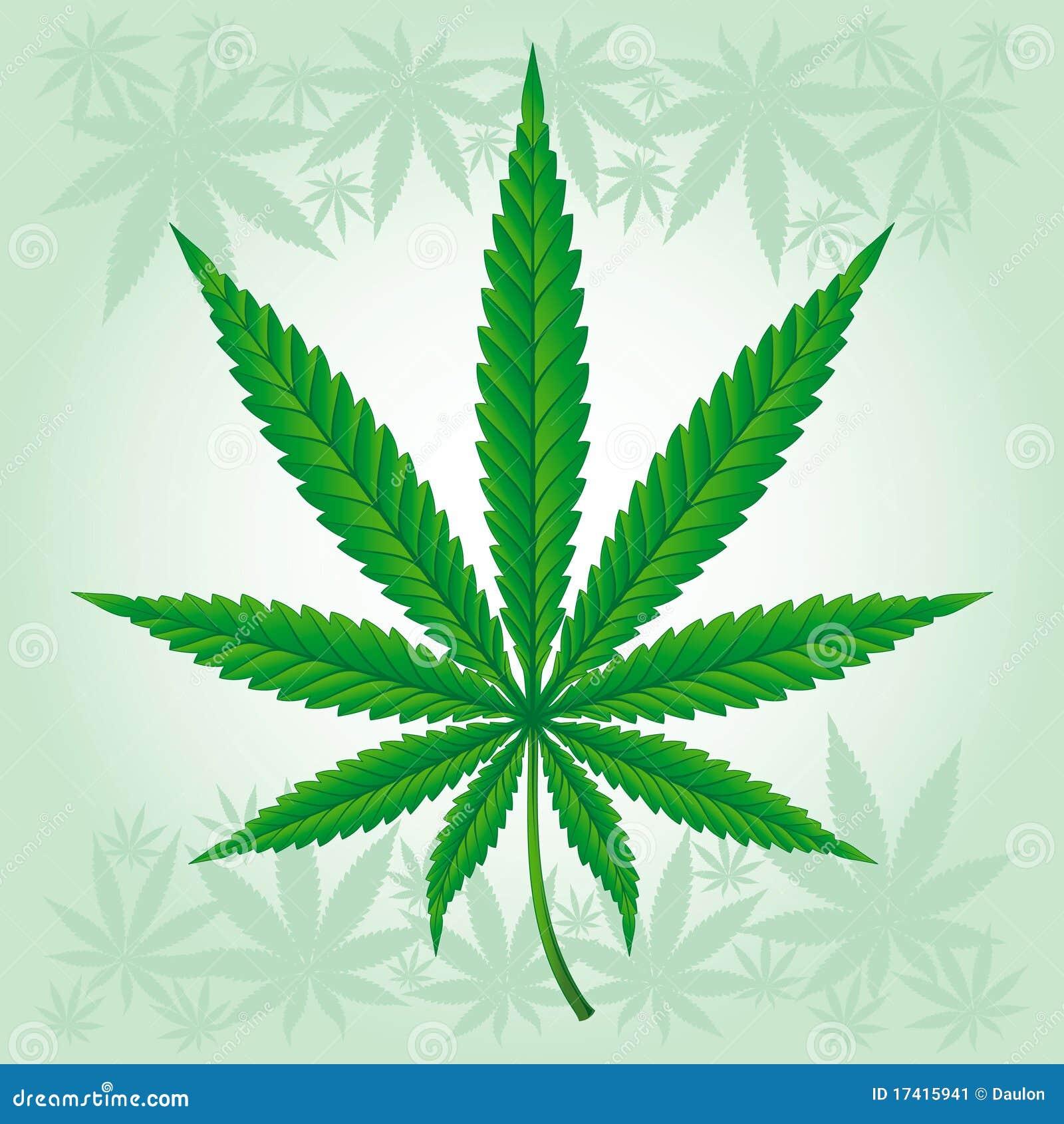 Folha do cannabis/marijuana/cânhamo detalhada