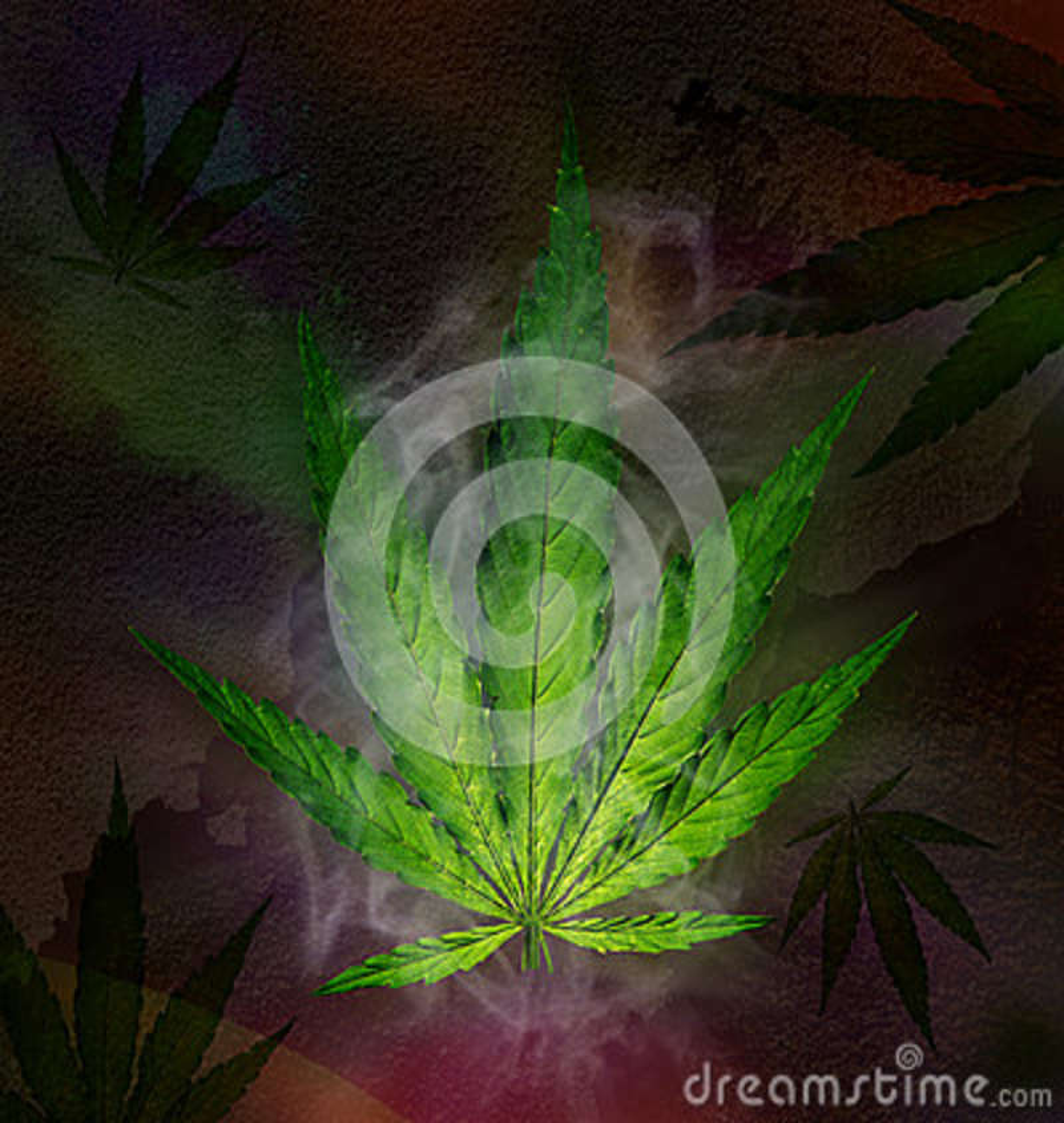 Folha do cannabis, planta de marijuana