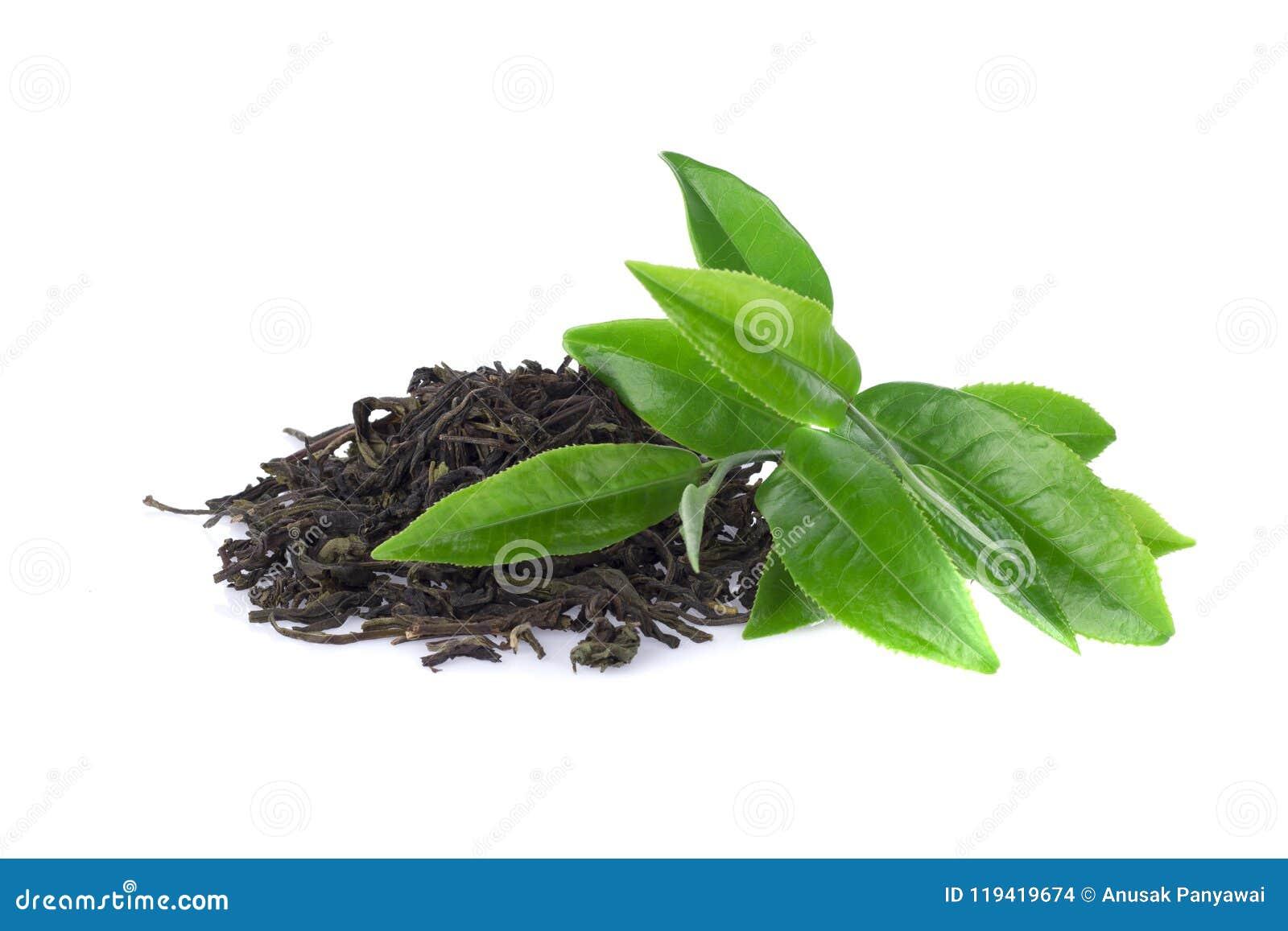 Folha do chá verde