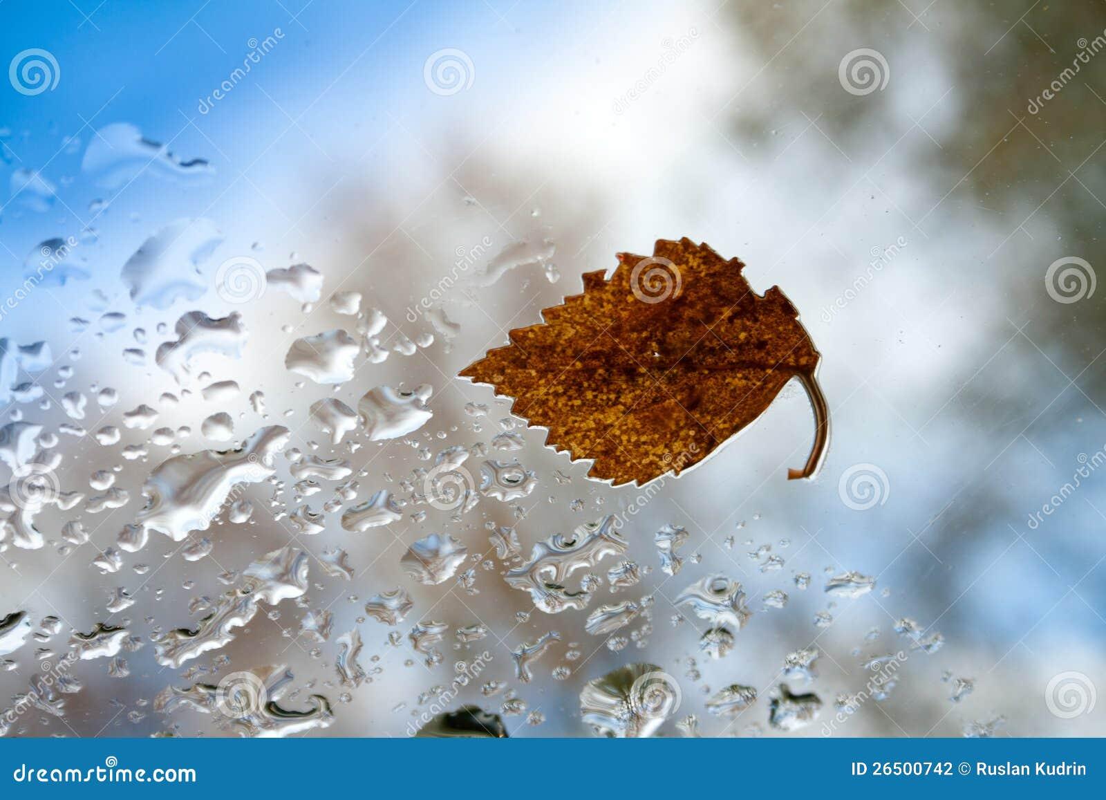 Folha do outono.
