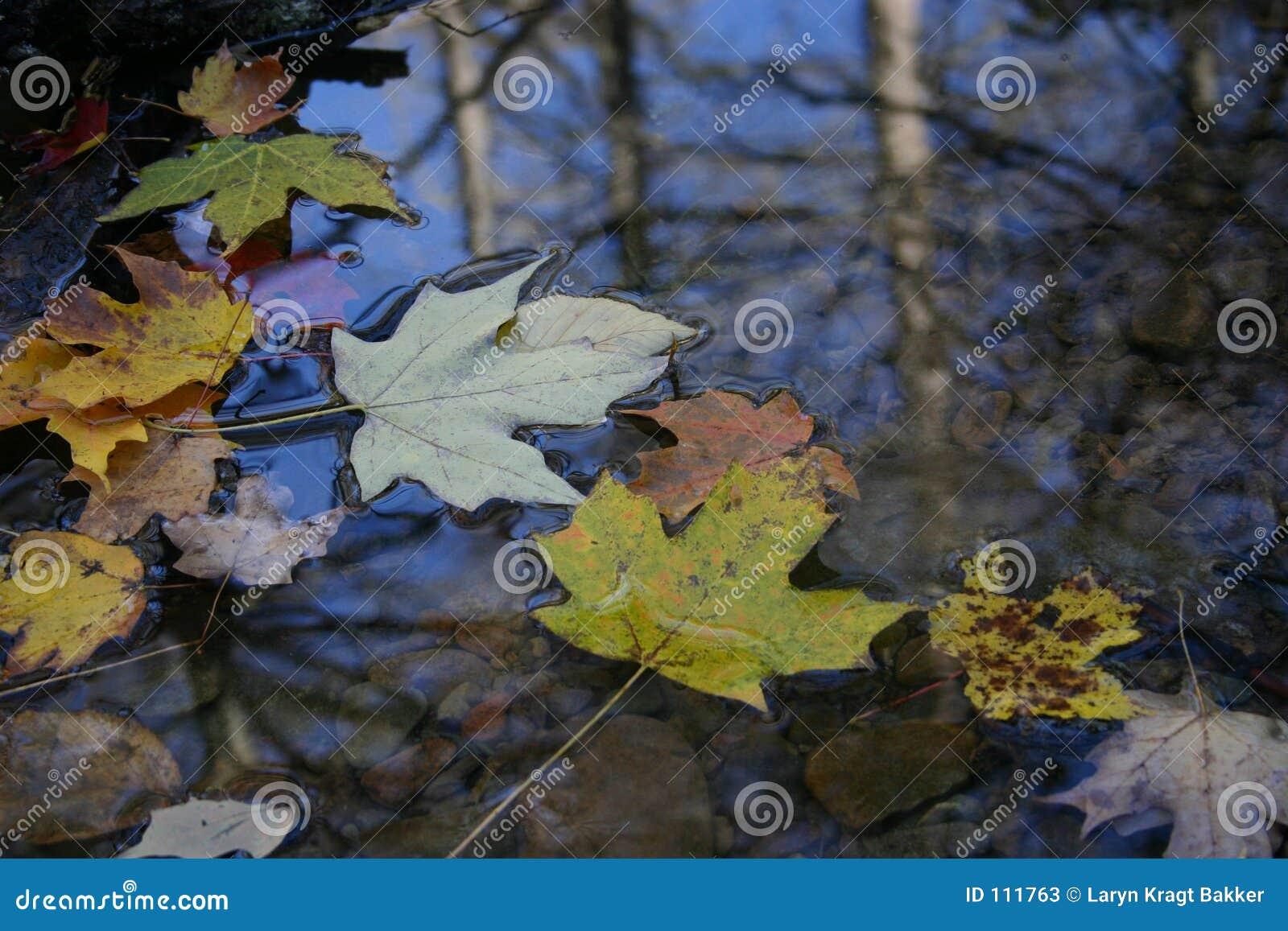 Folha do outono que flutua na superfície da água