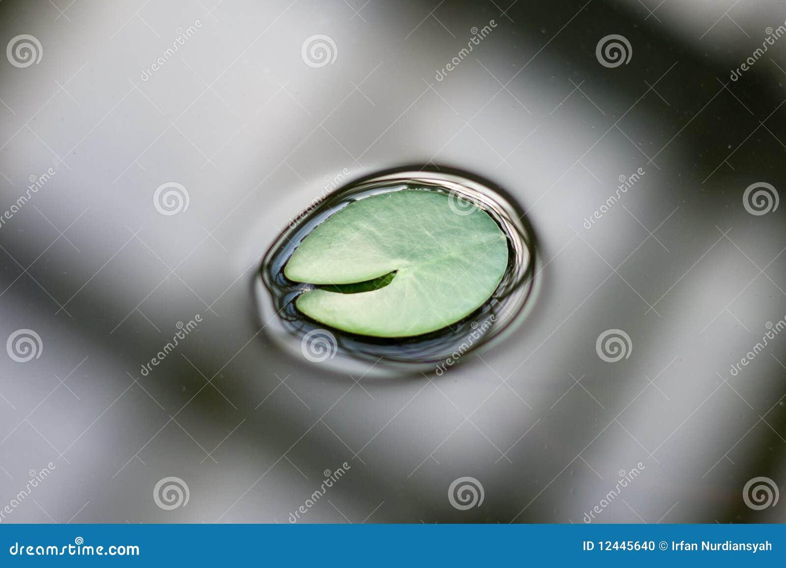 Folha dos lótus na água