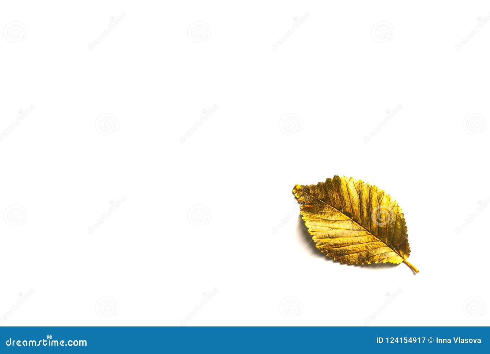 Folha dourada do outono com espaço da cópia
