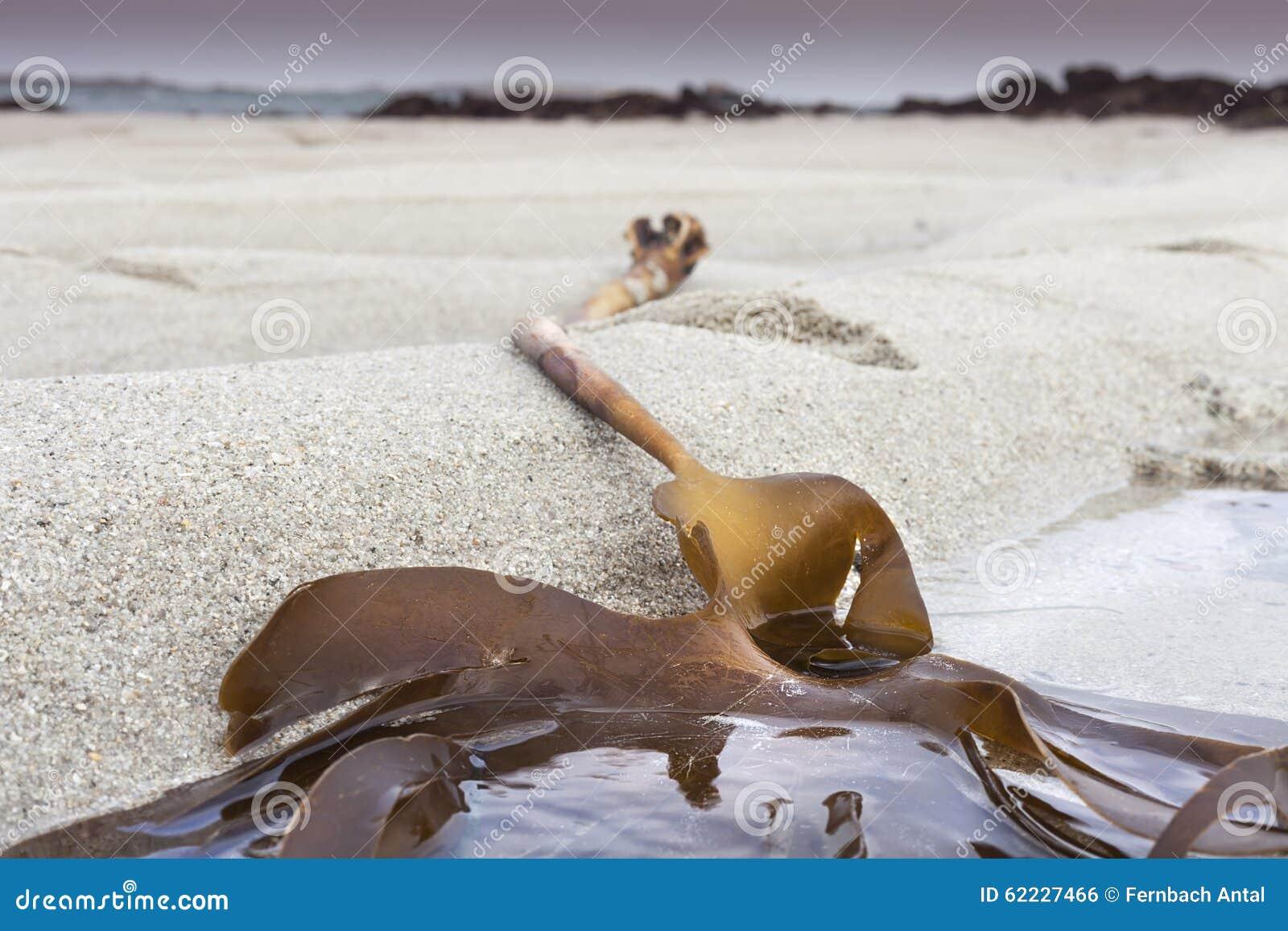 Folha e areia