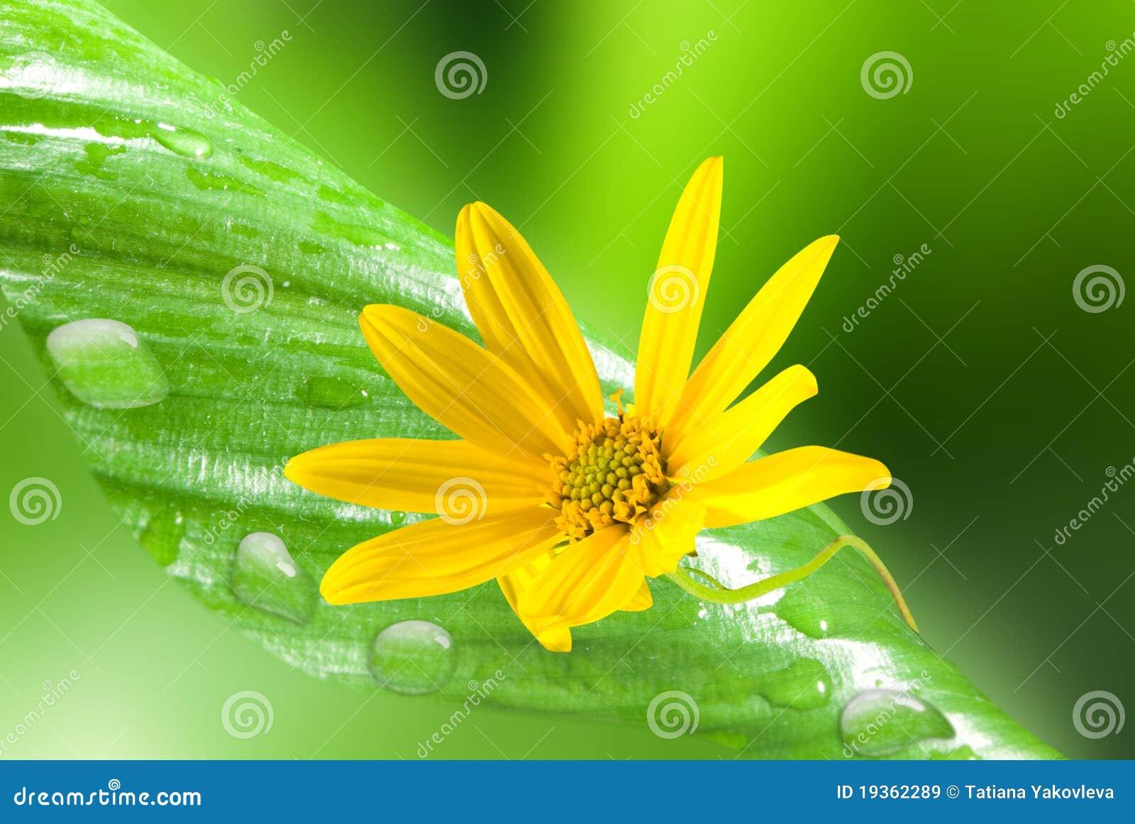 Folha e flor