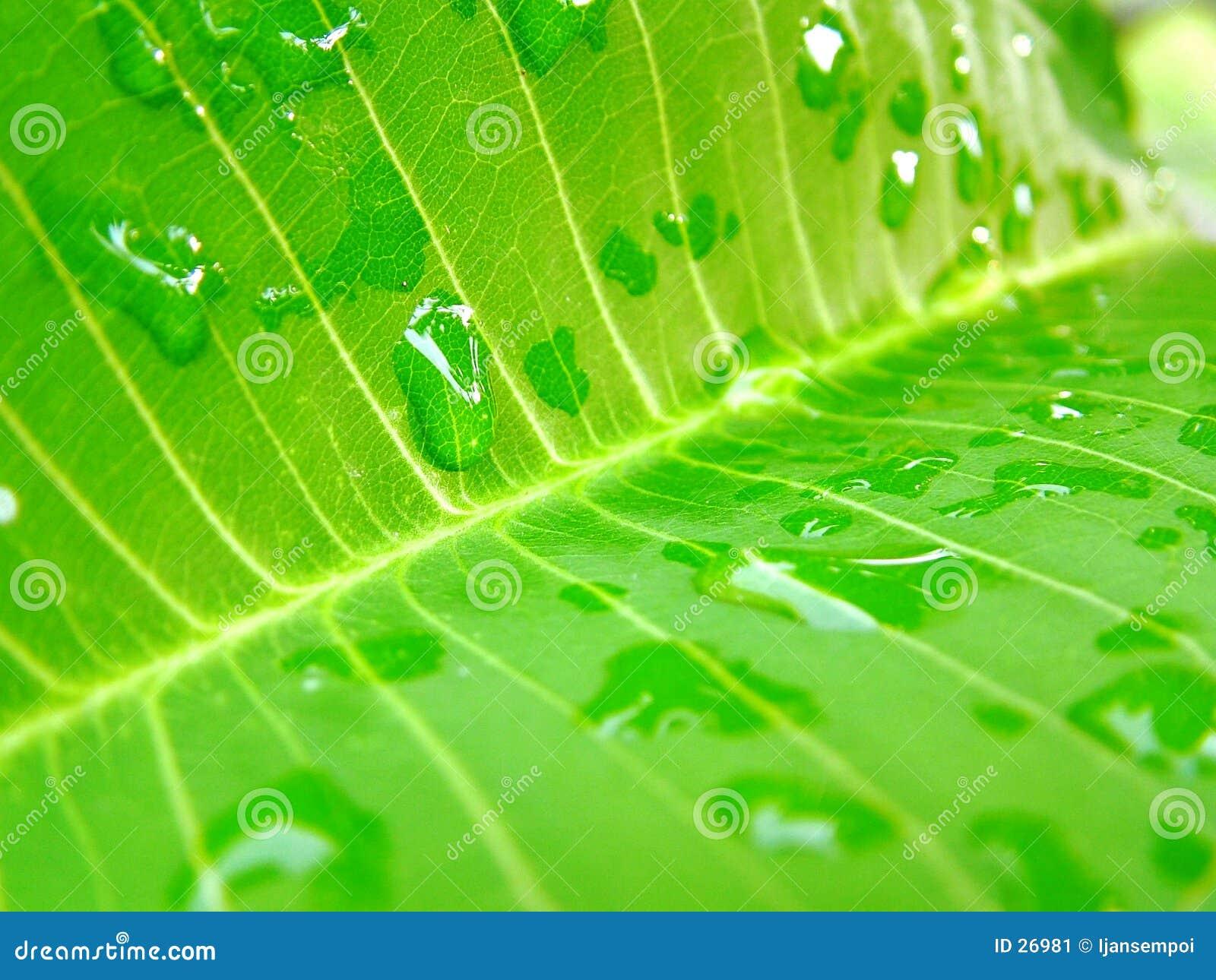 Folha e waterdrops