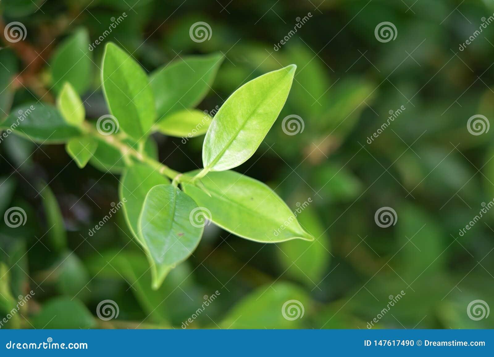 Folha, folhas, verde, fundo, branco, natureza