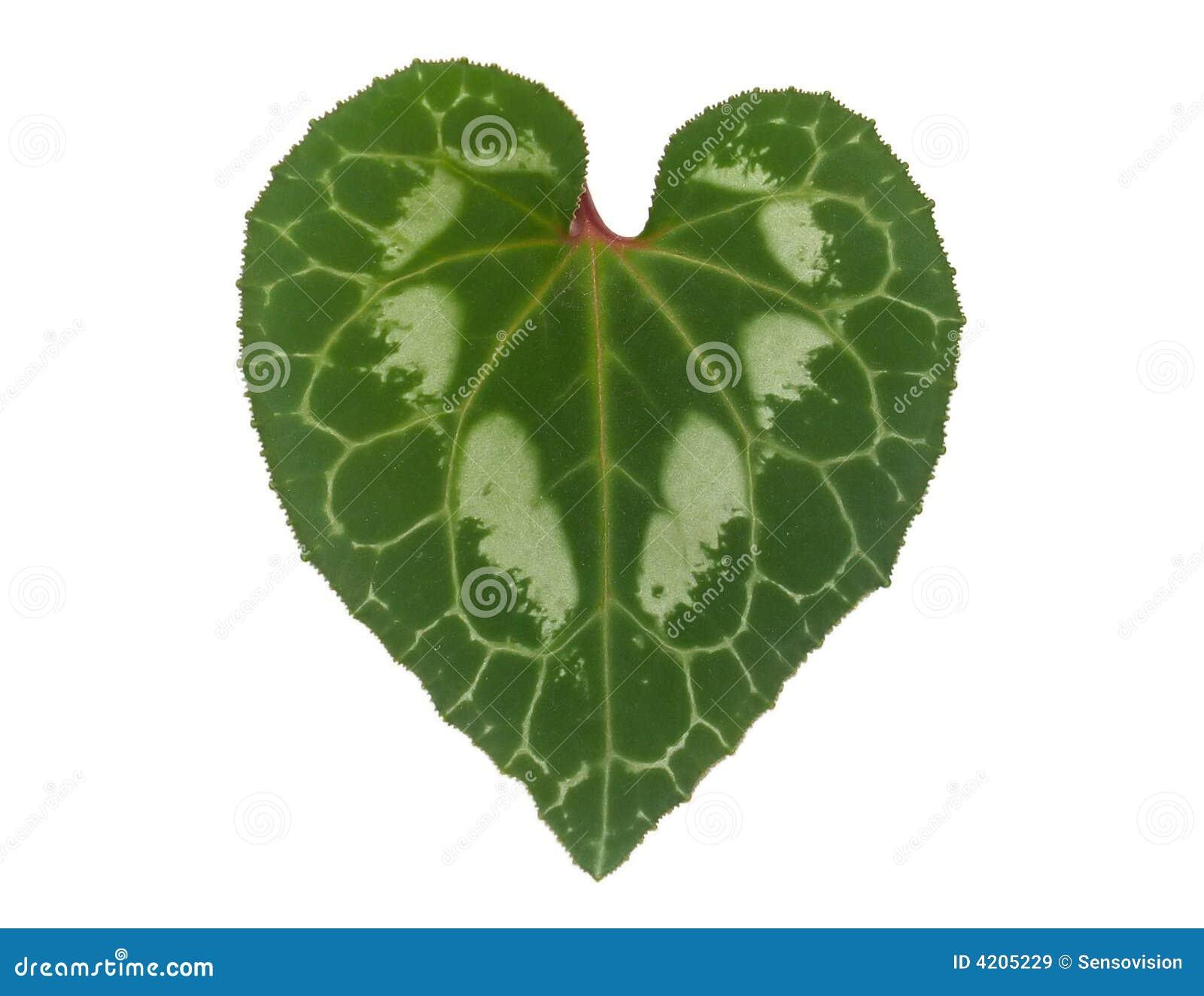 Folha Heart-Shaped