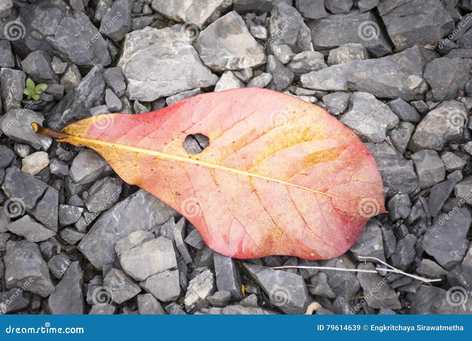 A folha no assoalho da rocha, folha vermelha do fundo, vista superior e zumbe dentro