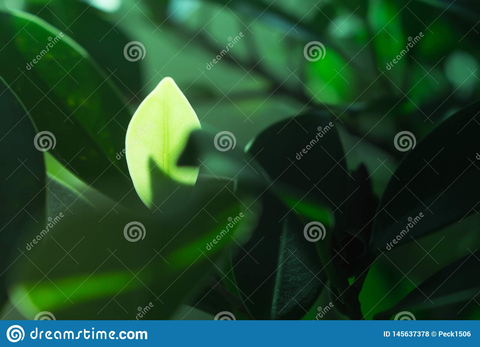 A folha no fundo da natureza