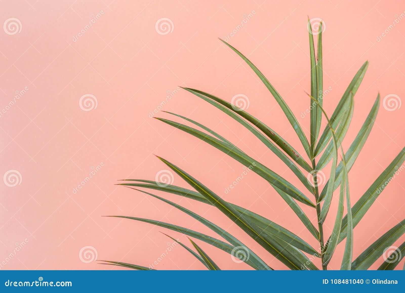 Folha pontudo da palmeira no fundo Peachy cor-de-rosa da parede Decoração interior da planta da sala Cores pastel funky do estilo