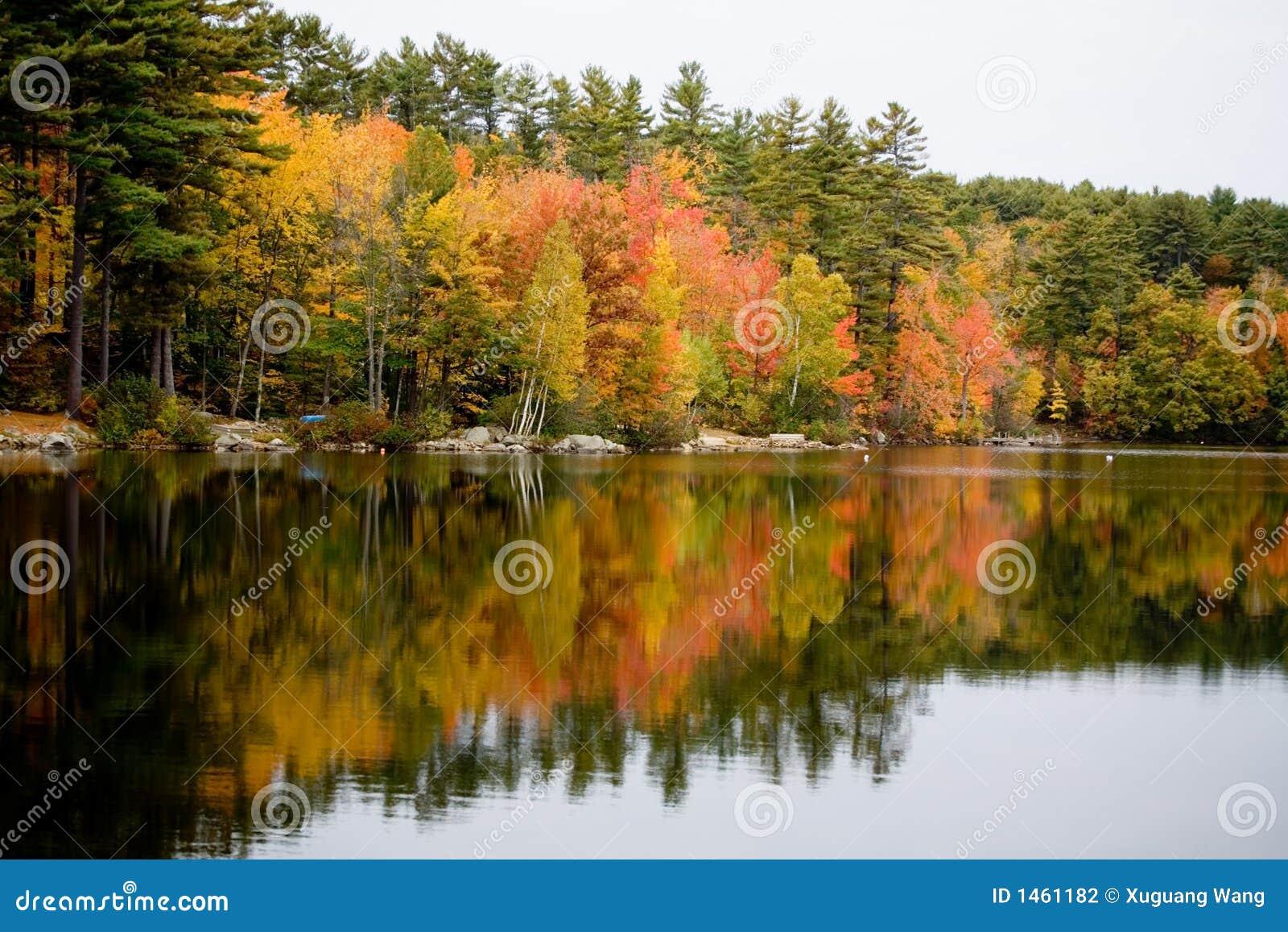 Folha refletida no lago