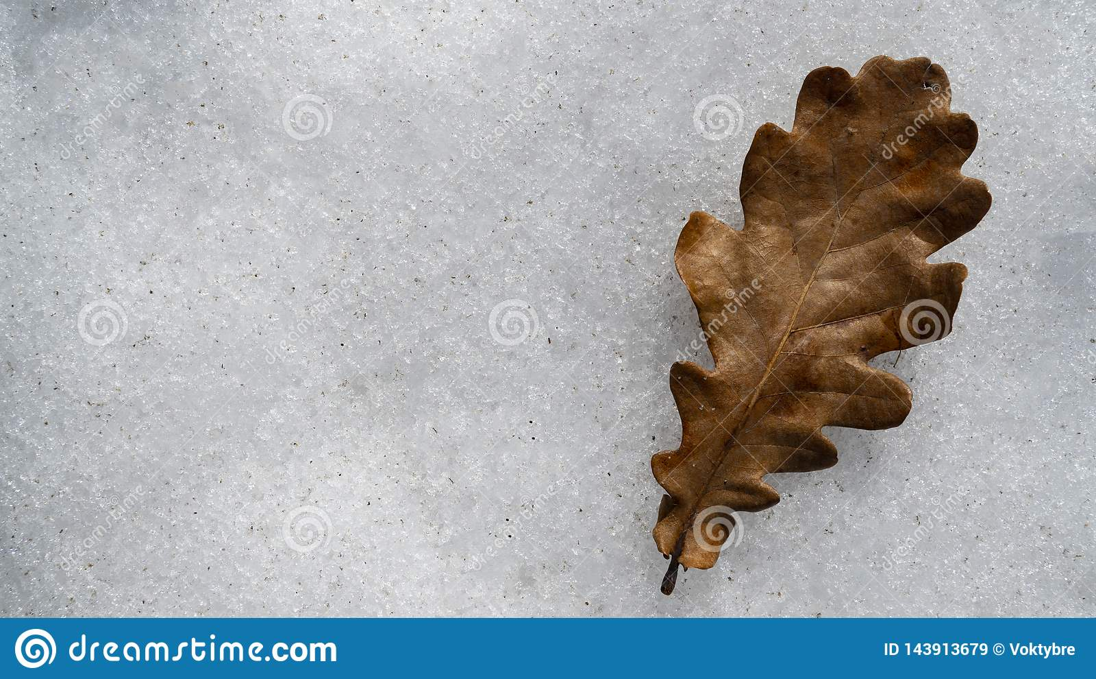Folha seca do carvalho na neve