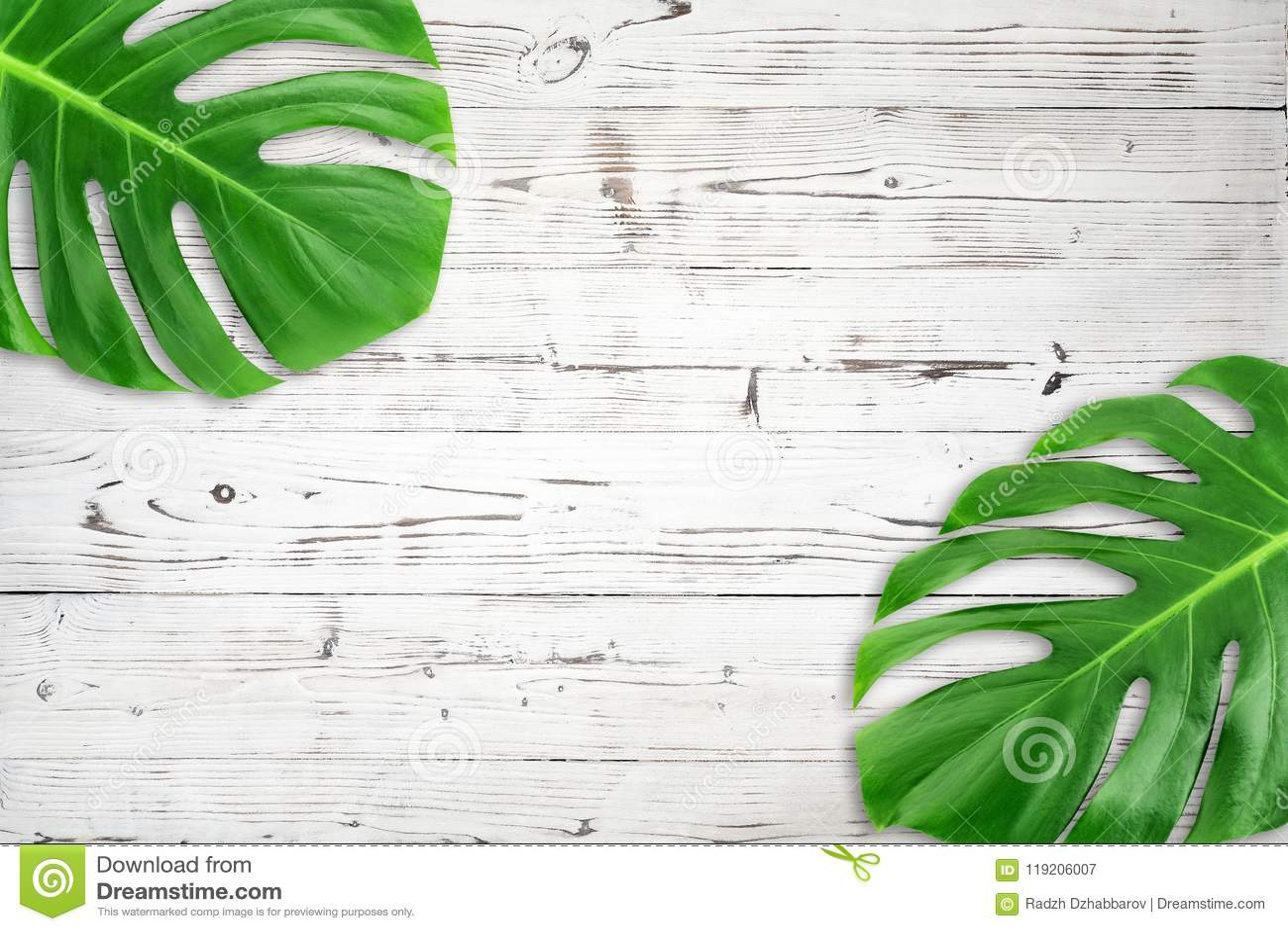 Folha tropical verde colocada da composição plano mínimo O trópico criativo da disposição deixa o quadro com o espaço da cópia no