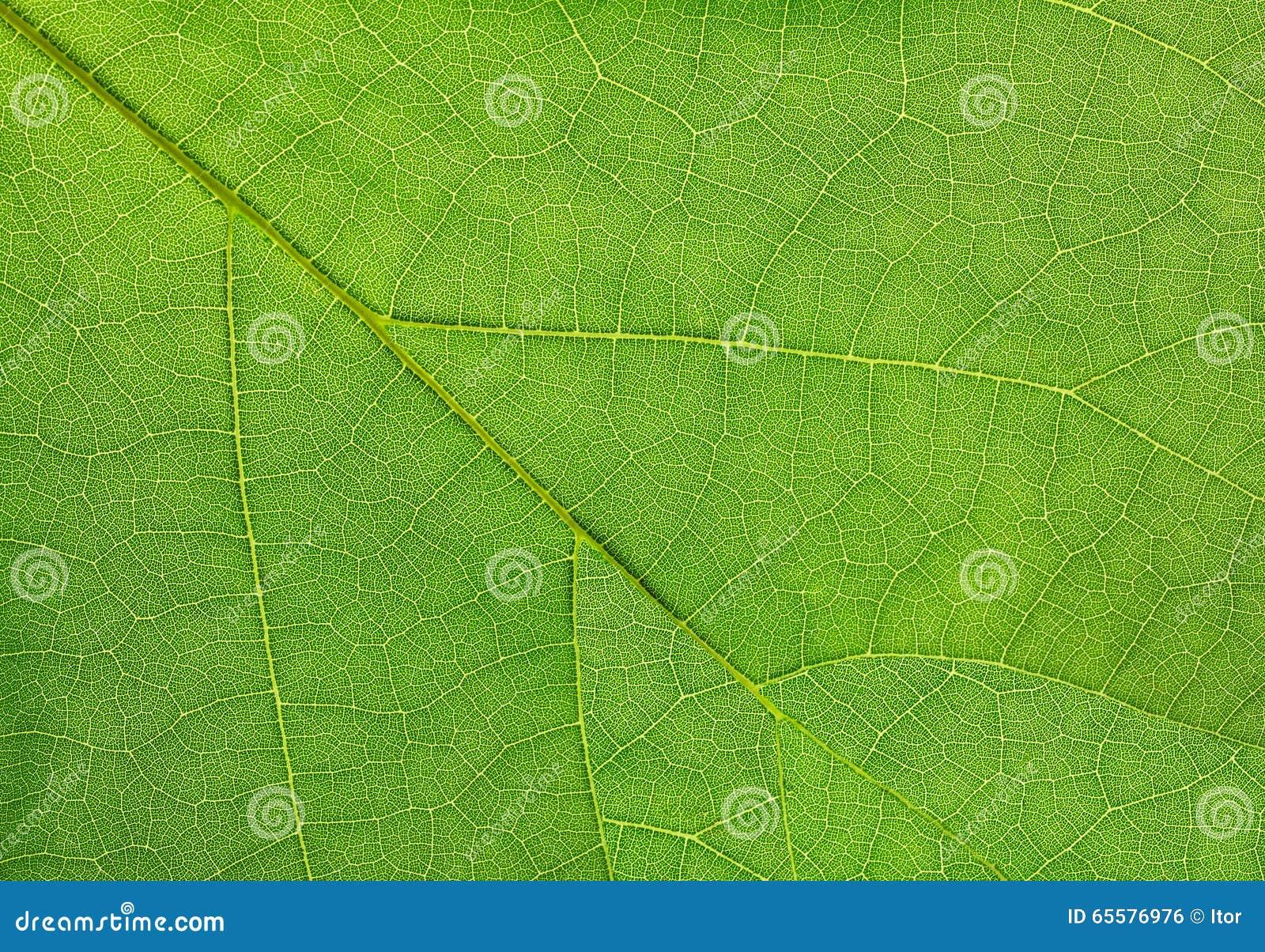 Folha verde de um fim do macro da planta acima