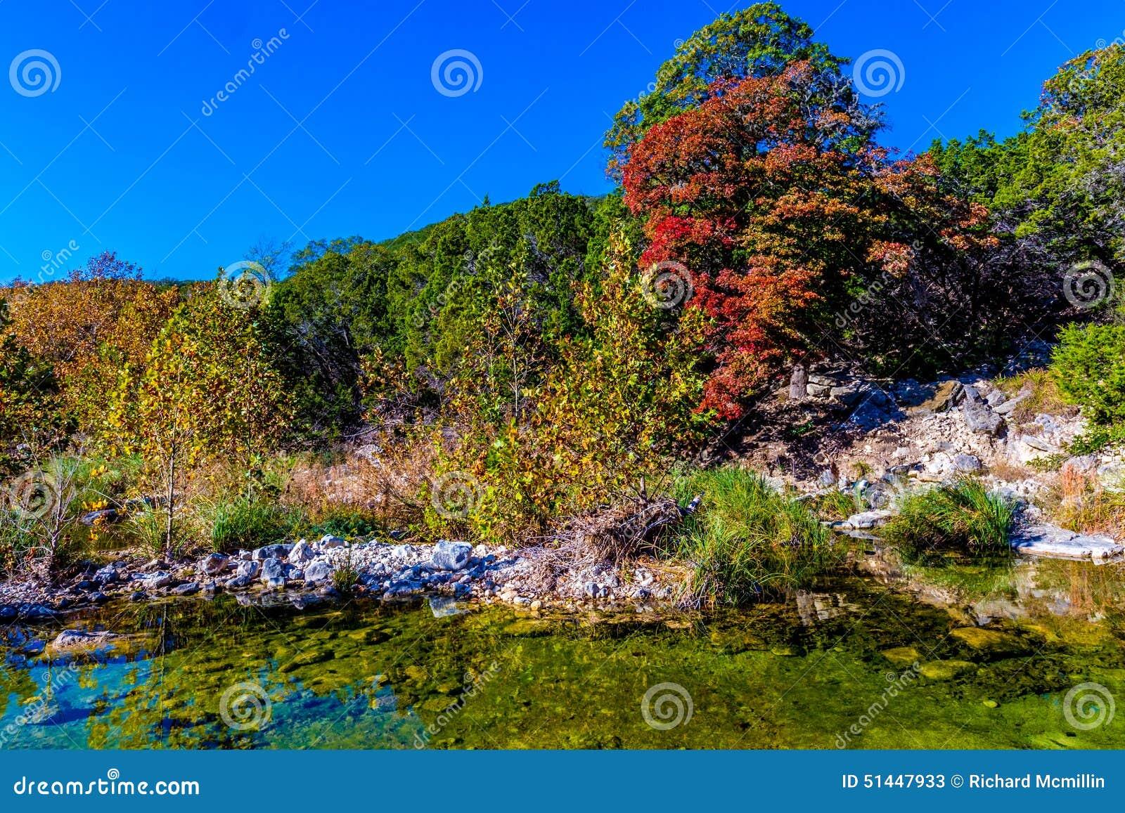 Folhagem de outono bonita brilhante em árvores de bordo impressionantes