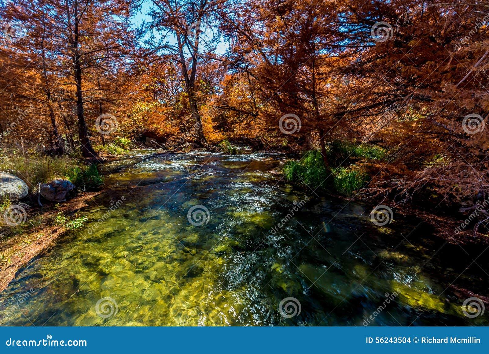 Folhagem de outono bonita em Guadalupe River, Texas