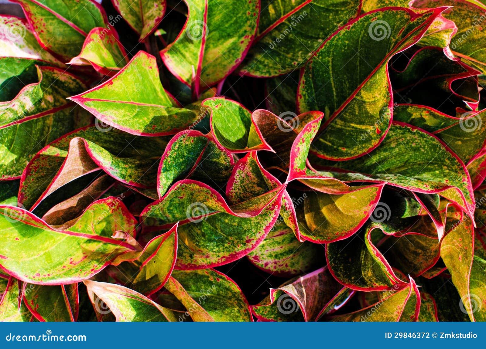 Folhas coloridas frescas
