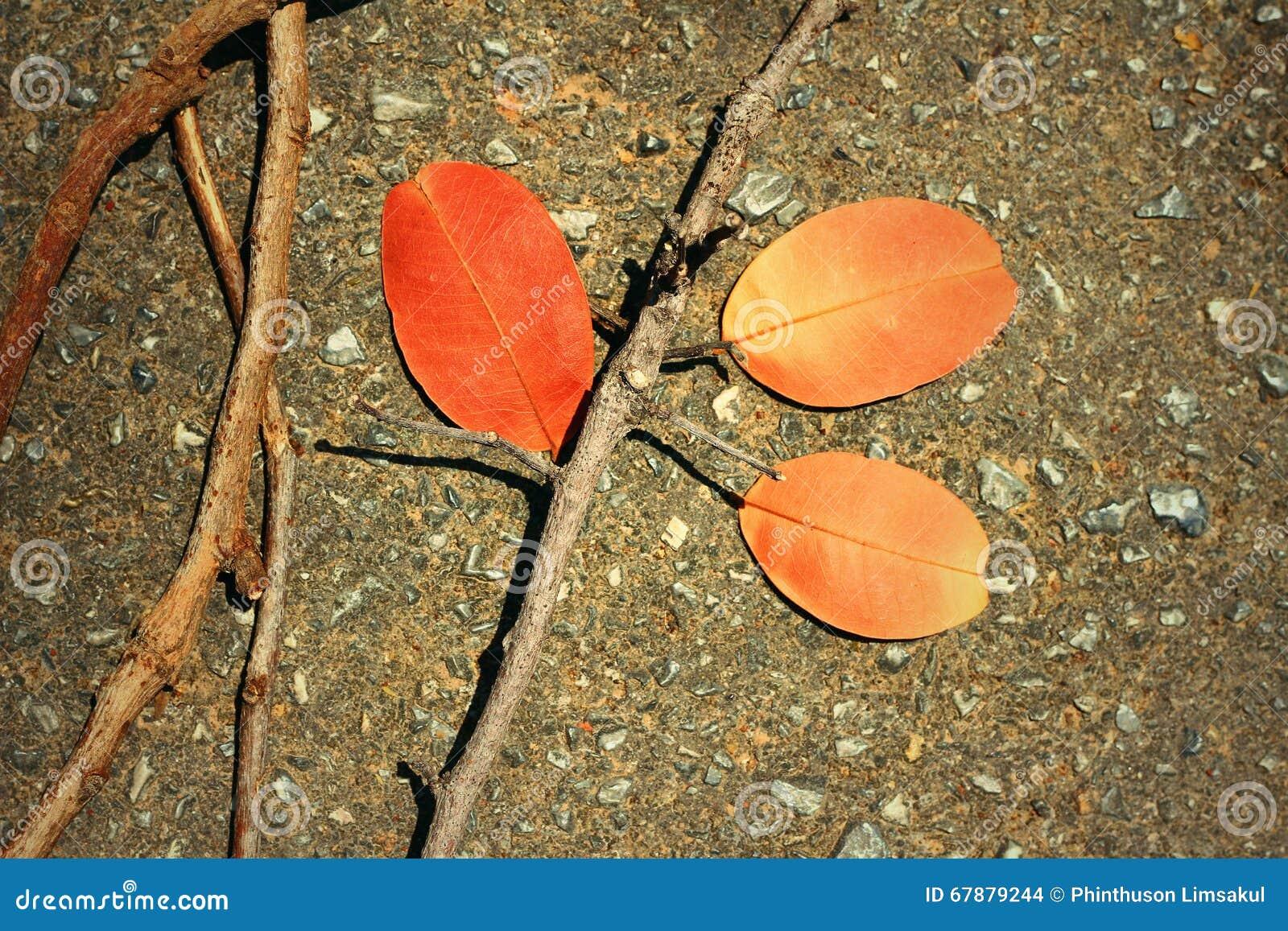 Folhas com ramos