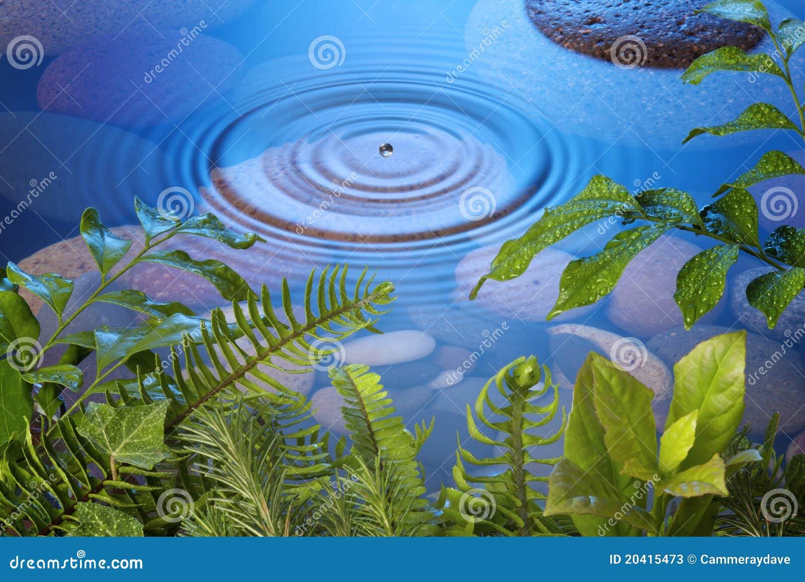 Folhas da gota da água da natureza
