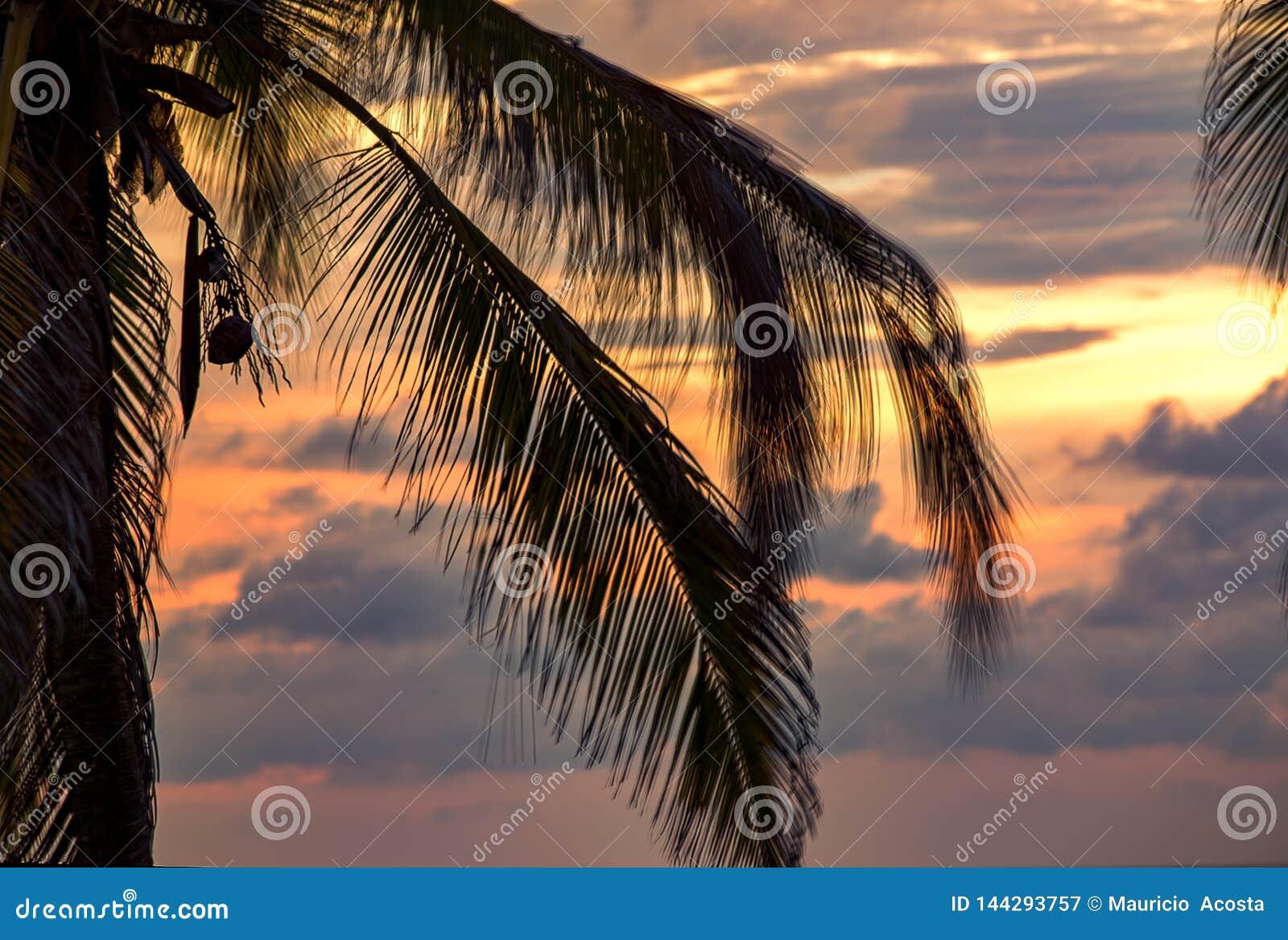 Folhas da palmeira fundidas pelo vento