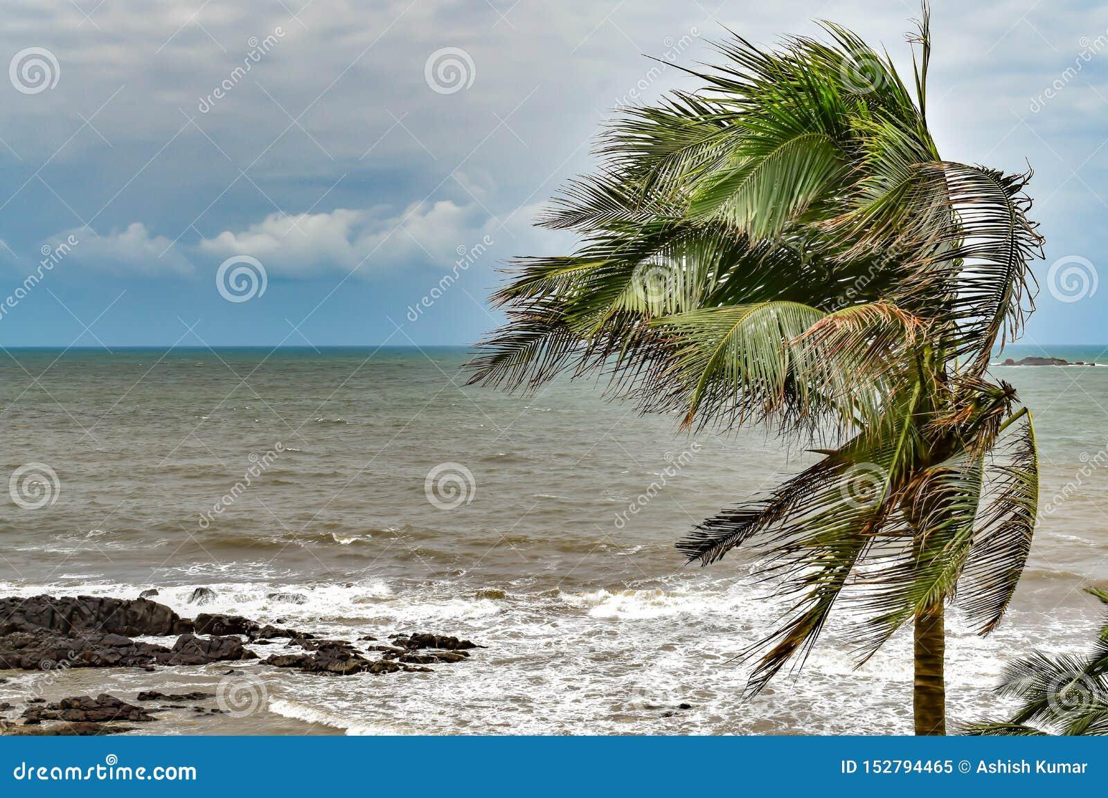 Folhas da palmeira que farfalham em ventos ciclônicos na estação áspera com as nuvens brancas no céu azul e no horizonte claro
