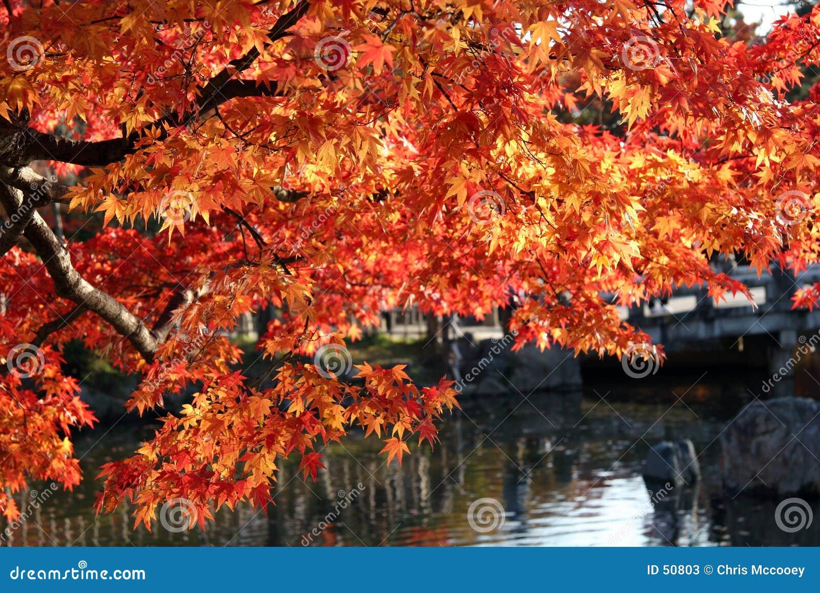 Folhas da queda sobre a água.