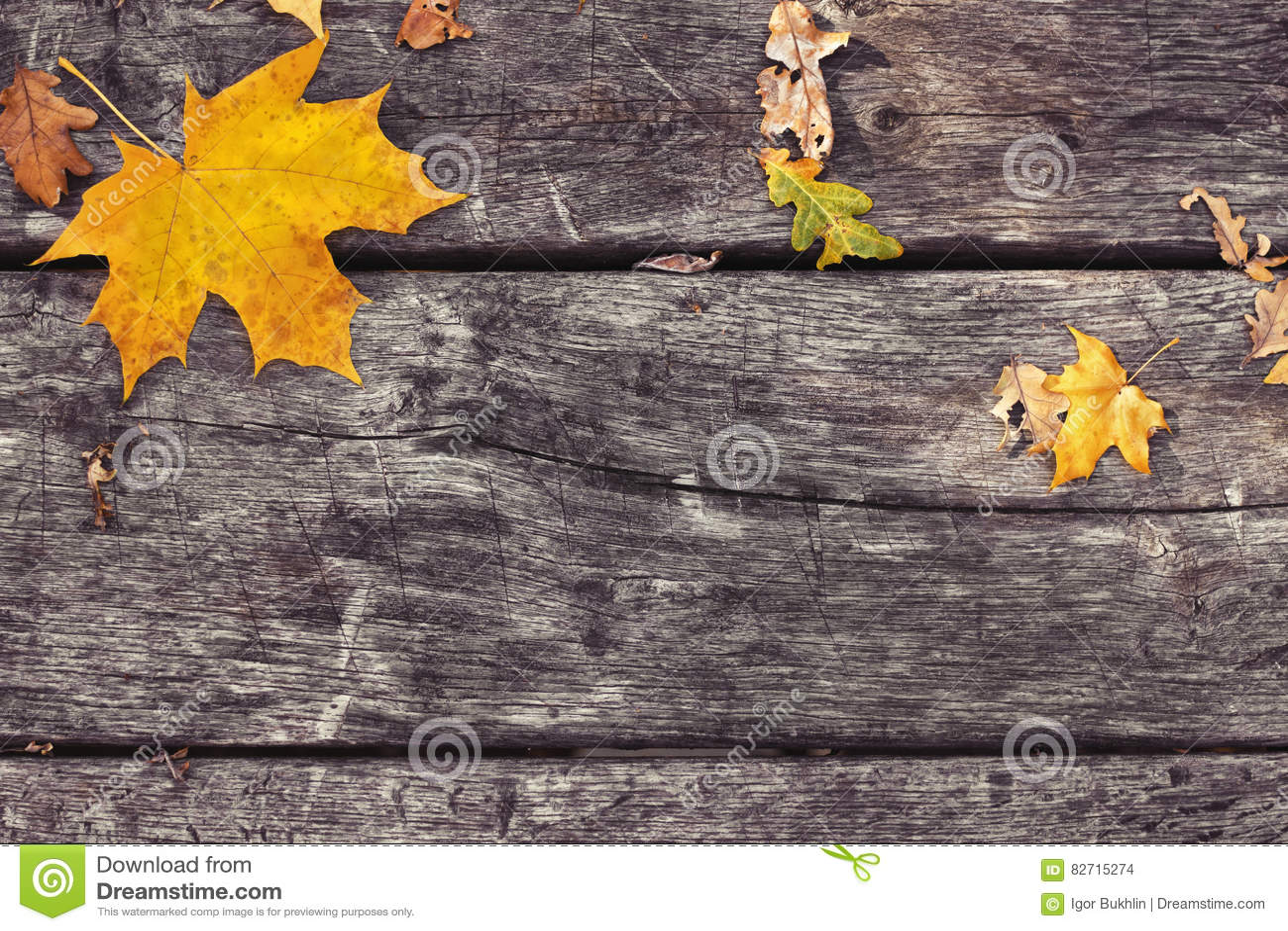 Folhas de bordo caídas na tabela de madeira velha Fundo do outono