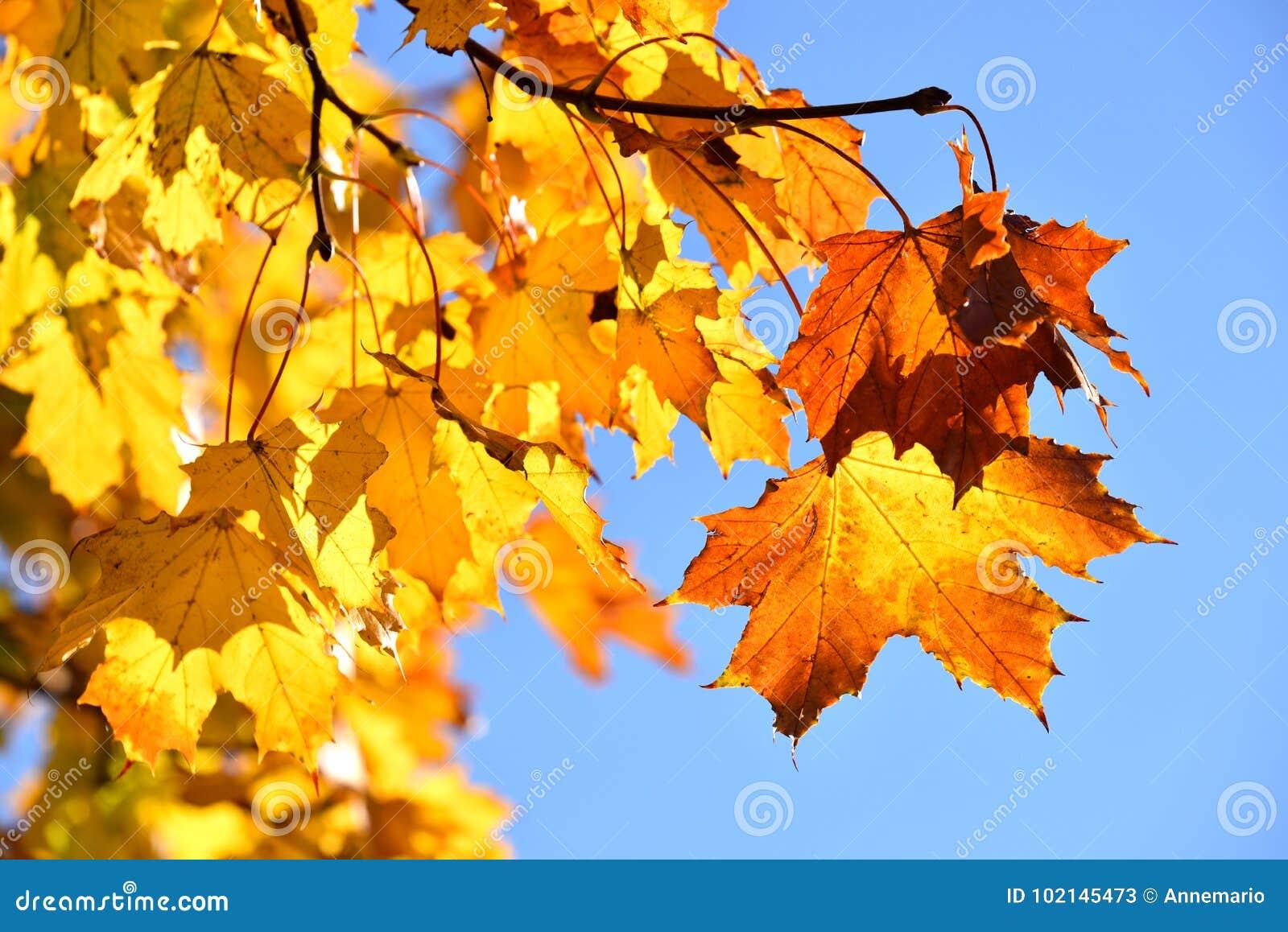 Folhas de bordo da queda