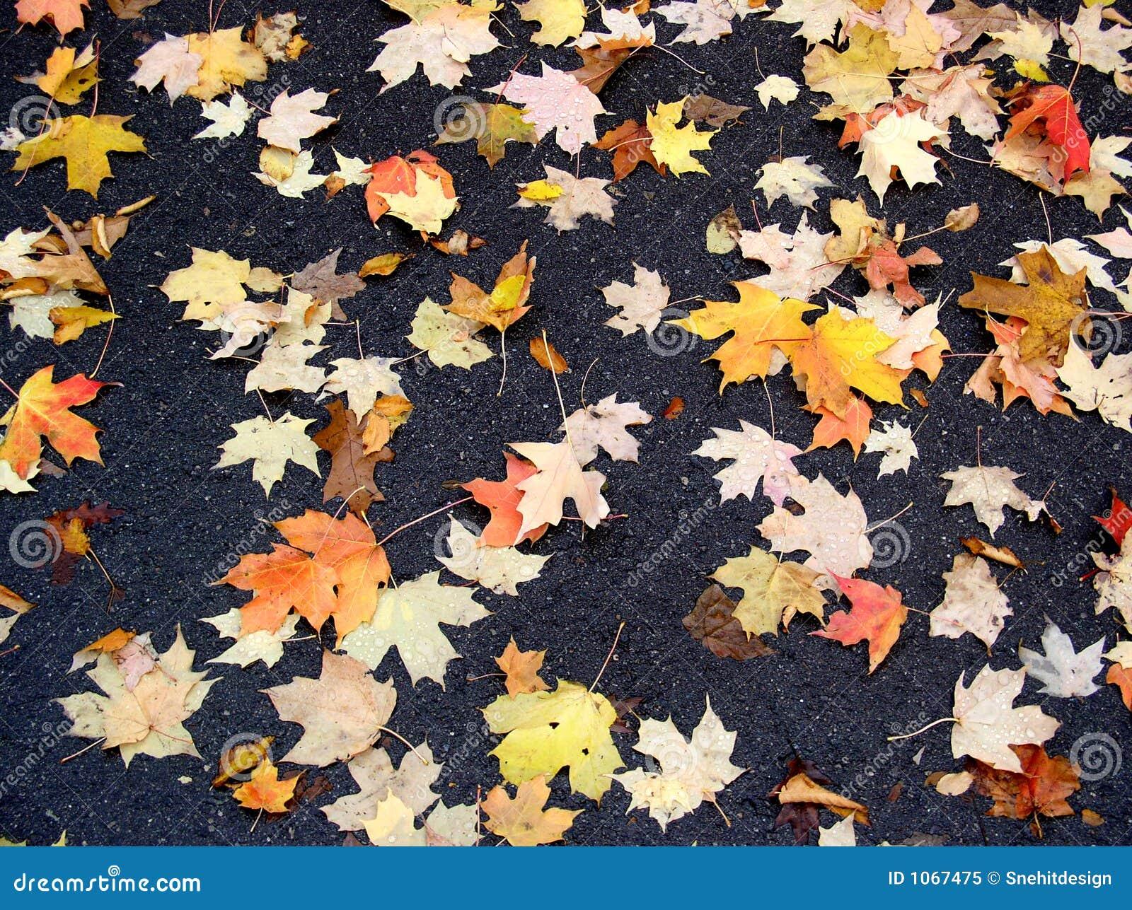 Folhas de Fal