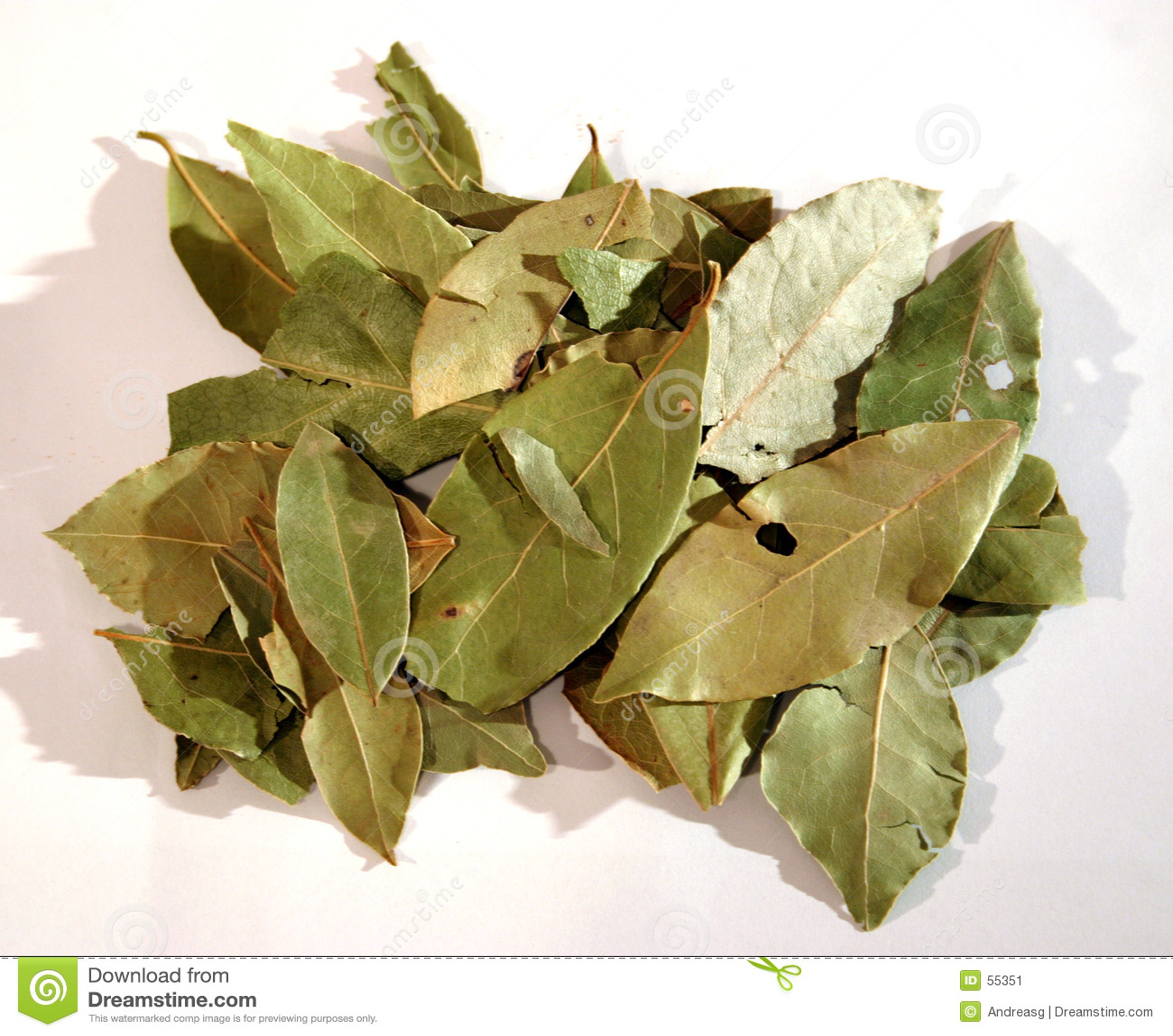 Folhas de louro 2