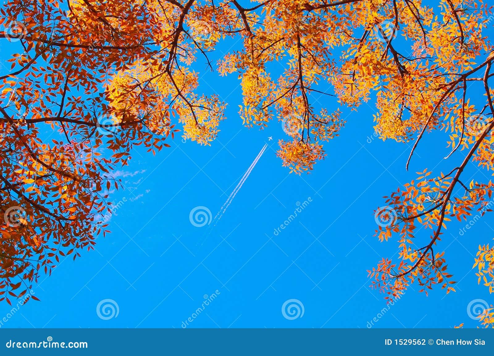 Folhas de outono