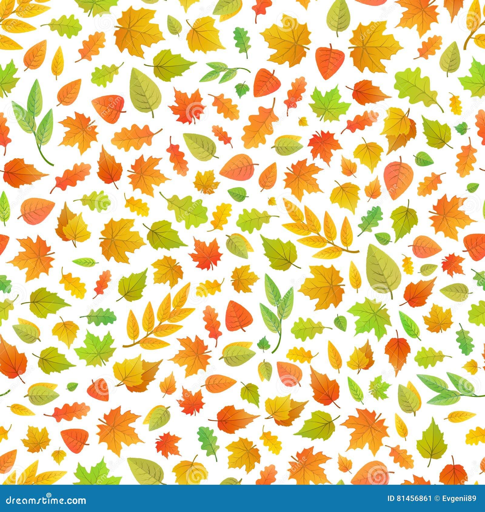 Folhas de outono bonitos do tipo diferente das árvores no teste padrão branco, sem emenda