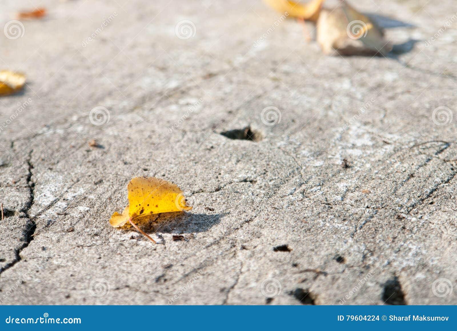 Folhas de outono coloridas na terra