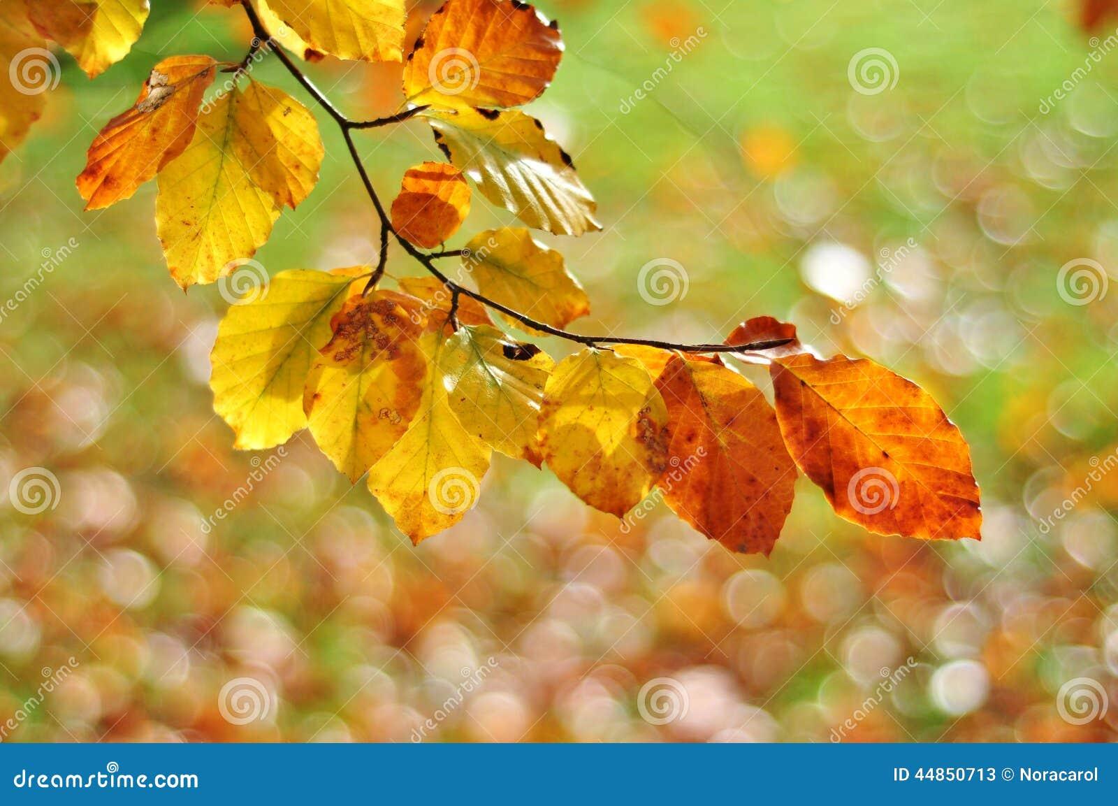 Folhas de outono com fundo obscuro