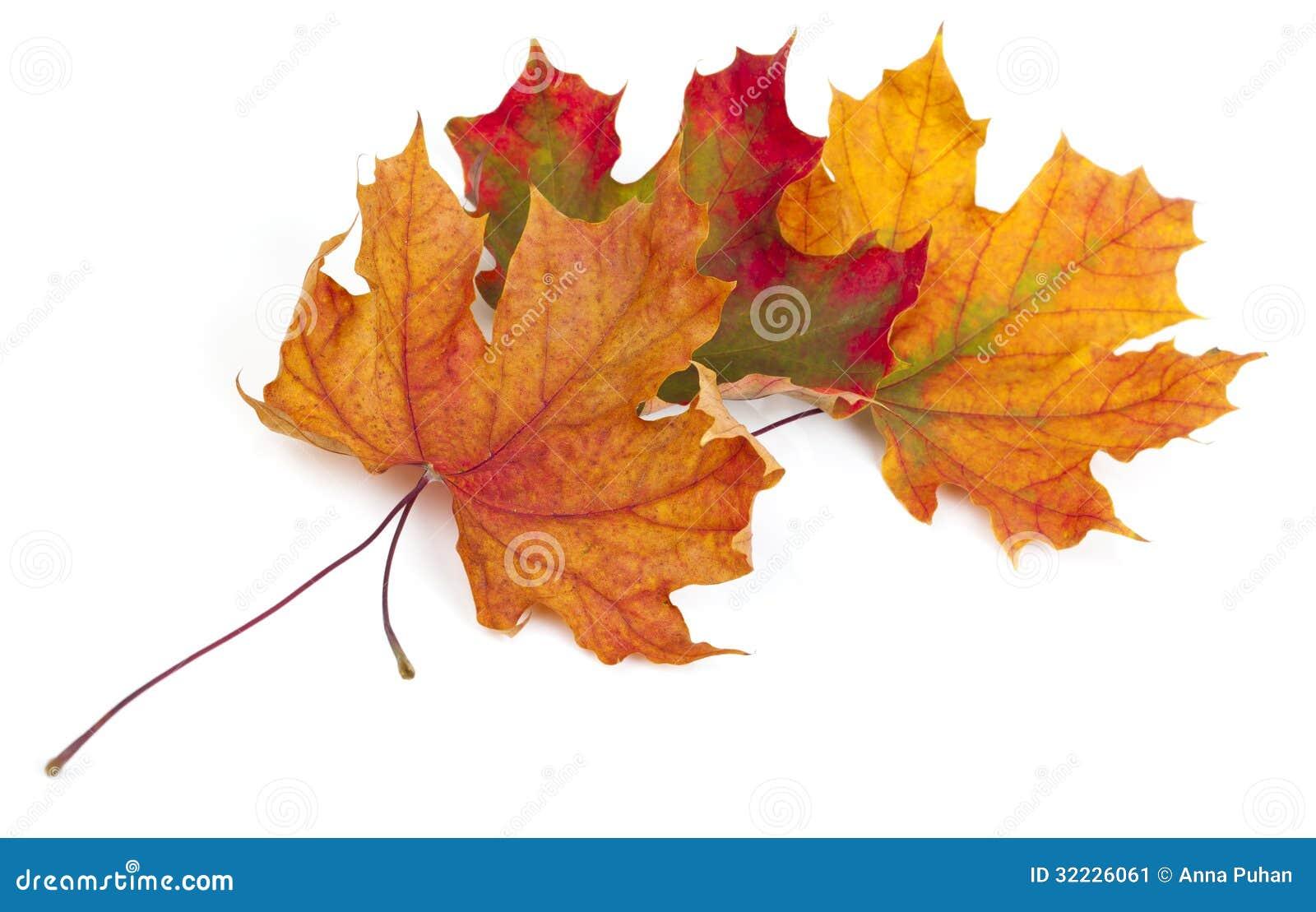 Download Folhas de outono do bordo imagem de stock. Imagem de macro - 32226061