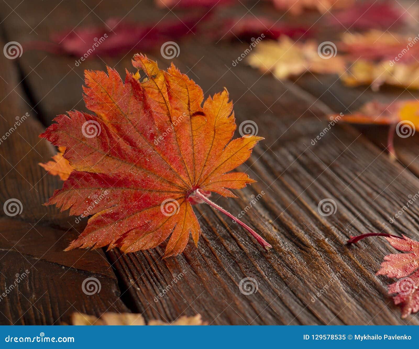 Folhas de outono do bordo japonês da palmeira no fundo de madeira da textura