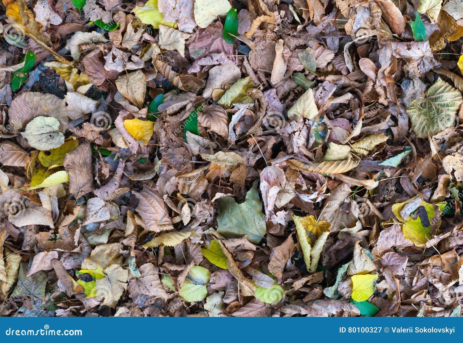 Folhas de outono na zona do parque