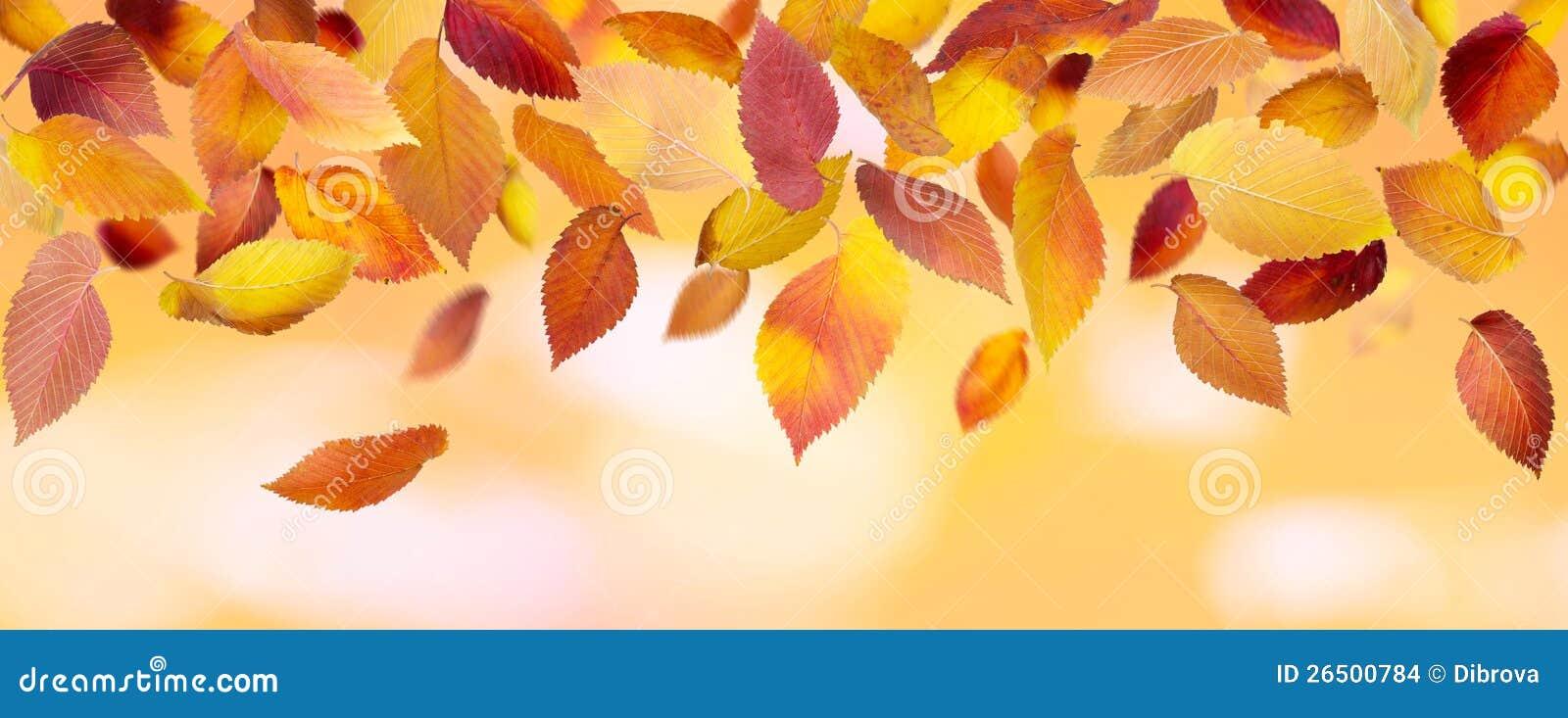Folhas de outono panorâmicos