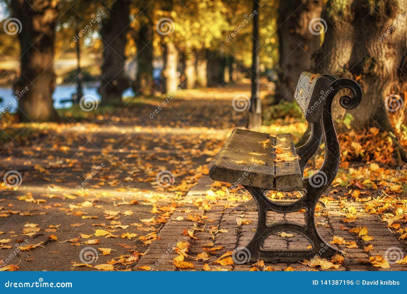 Folhas de outono que caem em um banco em um parque em Evesham worcestershire